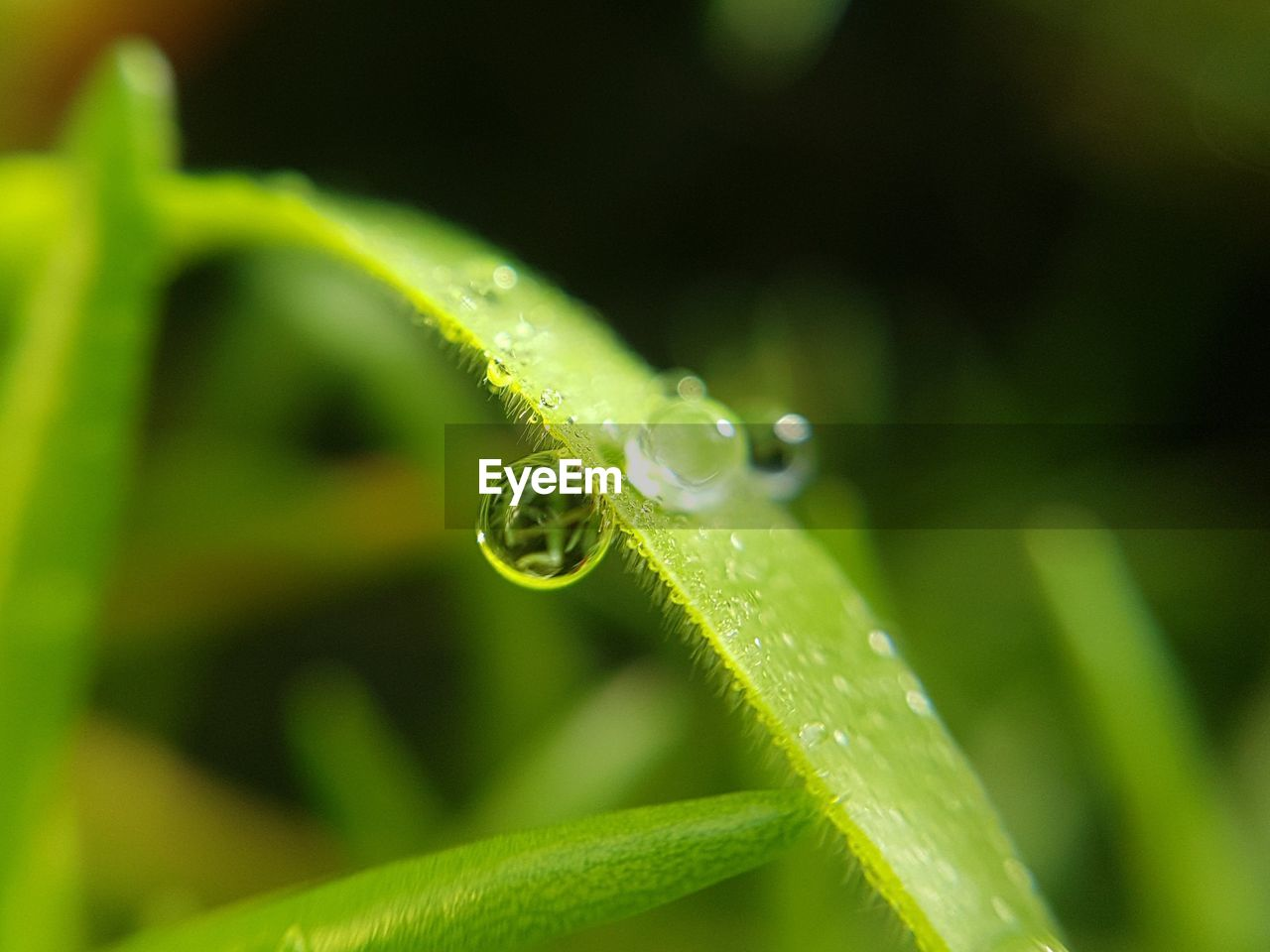 green color, close-up, growth, no people, nature, plant, selective focus, focus on foreground, leaf, freshness, day, plant part, animals in the wild, water, beauty in nature, one animal, animal wildlife, drop, invertebrate, outdoors, blade of grass