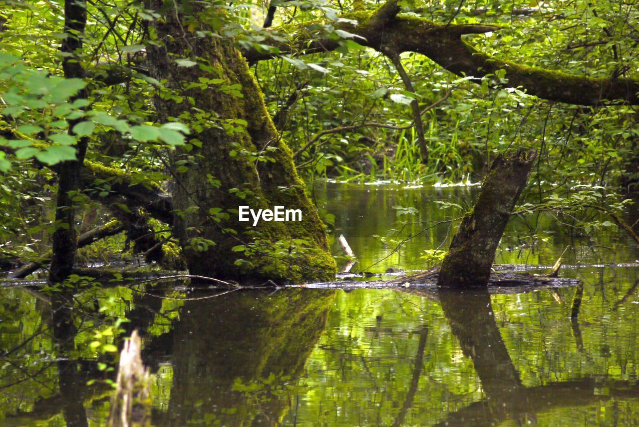 tree, water, reflection, plant, lake, forest, nature, tranquility, beauty in nature, land, growth, no people, woodland, day, green color, outdoors, scenics - nature, tranquil scene, foliage
