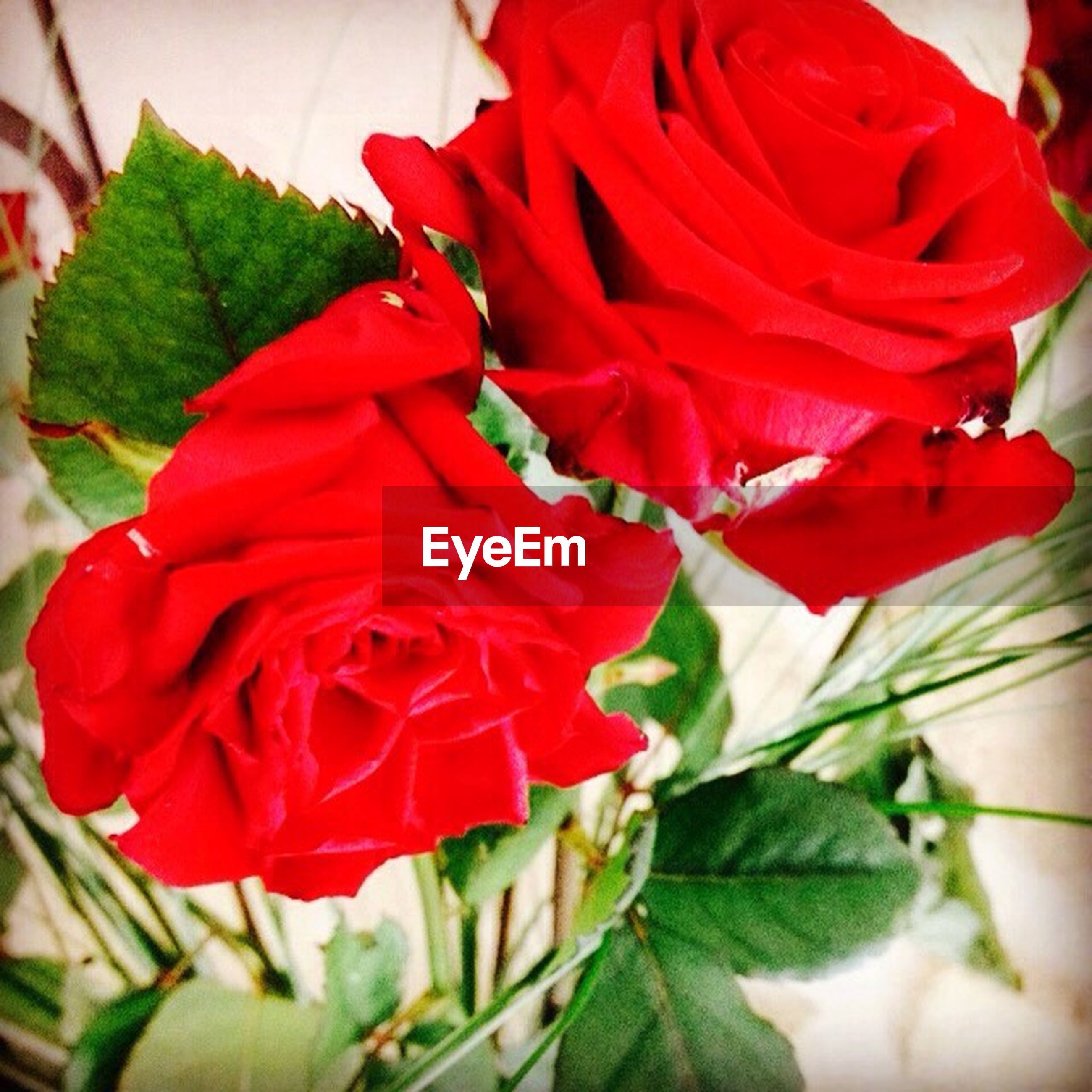 red, flower, freshness, growth, petal, fragility, flower head, close-up, leaf, plant, beauty in nature, nature, rose - flower, focus on foreground, blooming, single flower, in bloom, stem, day, botany