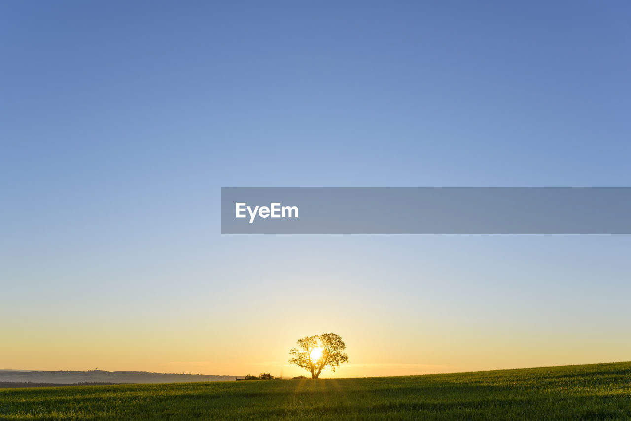 sky, landscape, environment, scenics - nature, beauty in nature, field, plant, tranquil scene, land, tranquility, copy space, nature, no people, clear sky, non-urban scene, horizon over land, rural scene, horizon, agriculture, growth, outdoors