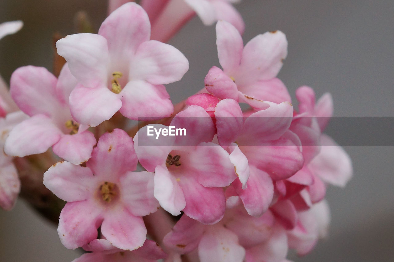 flower, pink color, petal, nature, beauty in nature, no people, close-up, fragility, growth, flower head, freshness, plant, day, outdoors