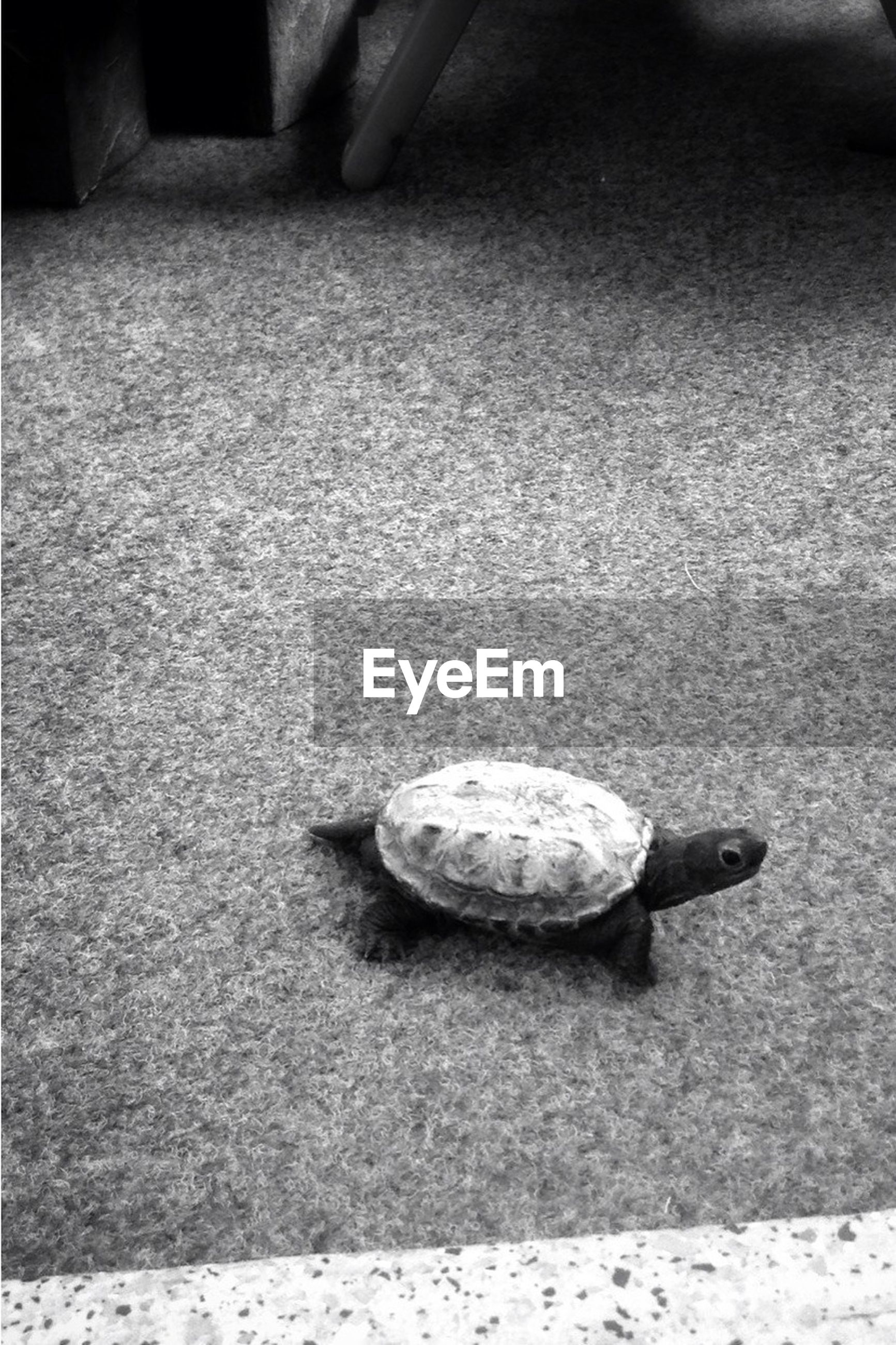 one animal, animal themes, wildlife, animals in the wild, no people, day, nature, outdoors, tortoise, close-up, tortoise shell
