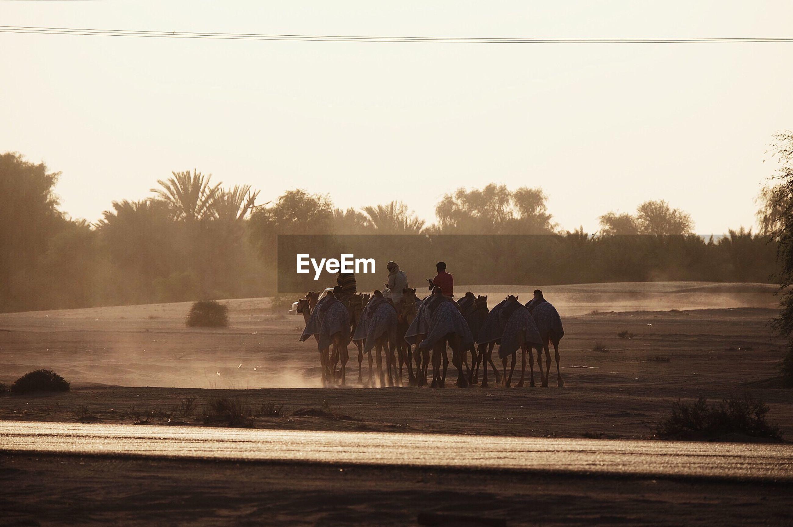 Men riding camel in desert against sky