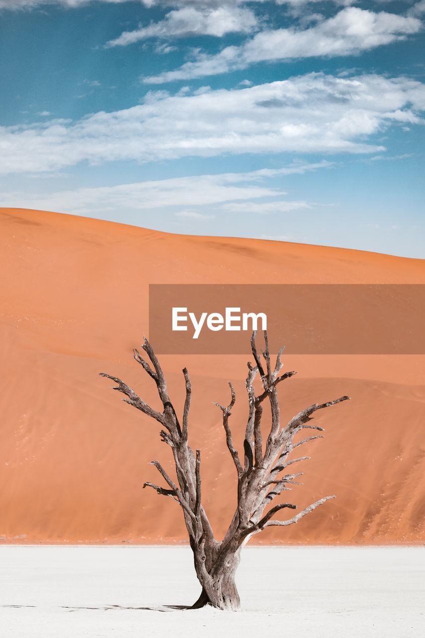 Dead tree on sand dune against sky