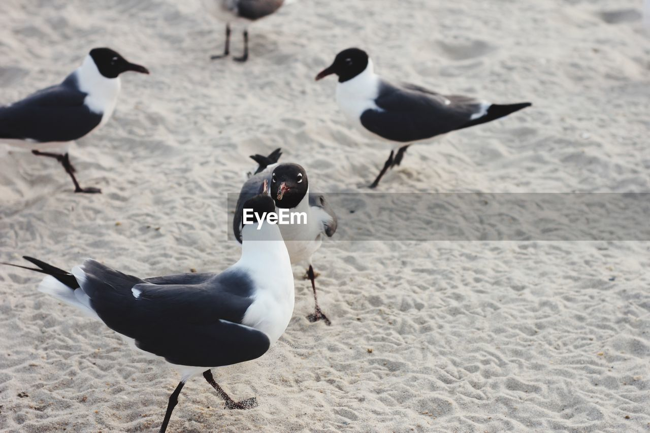 animal themes, animal, vertebrate, bird, group of animals, animals in the wild, animal wildlife, land, no people, beach, day, nature, seagull, high angle view, sand, outdoors, zoology, focus on foreground, black color, three animals