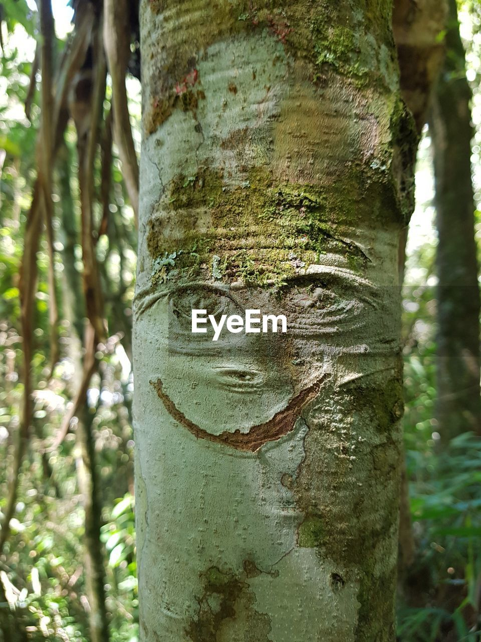 tree, trunk, tree trunk, plant, focus on foreground, forest, growth, nature, day, close-up, land, outdoors, no people, beauty in nature, bark, textured, woodland, plant bark, moss, natural pattern