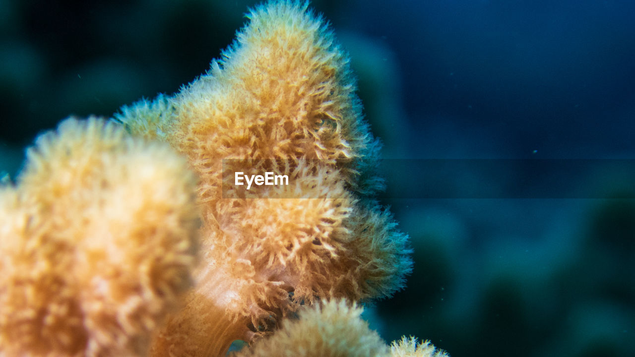 underwater, animals in the wild, sea, sea life, animal themes, animal wildlife, marine, animal, undersea, water, one animal, invertebrate, coral, close-up, no people, nature, beauty in nature, outdoors, vertebrate, ecosystem, turquoise colored
