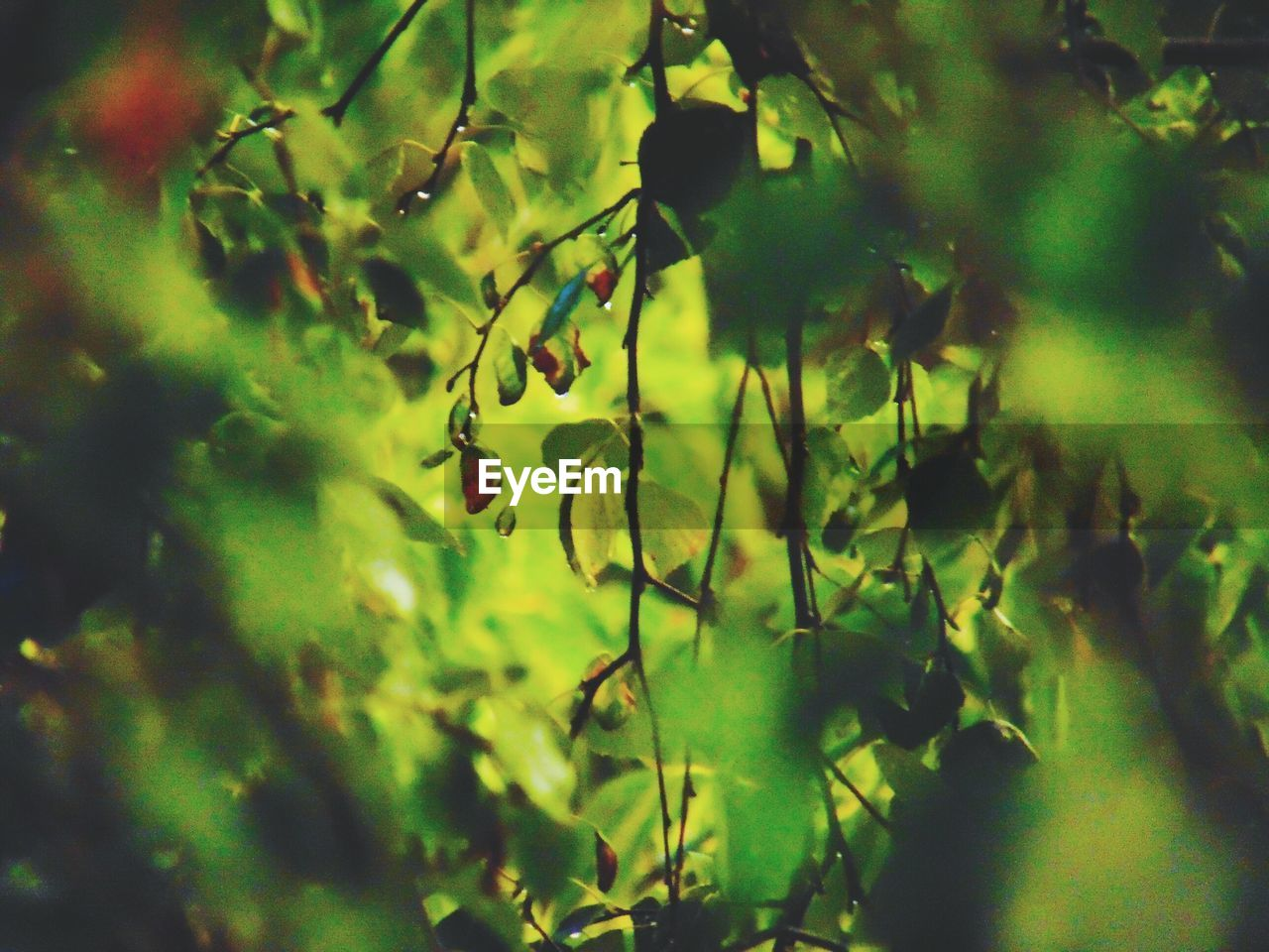 growth, nature, green color, plant, no people, tree, fruit, beauty in nature, day, outdoors, freshness, branch, close-up