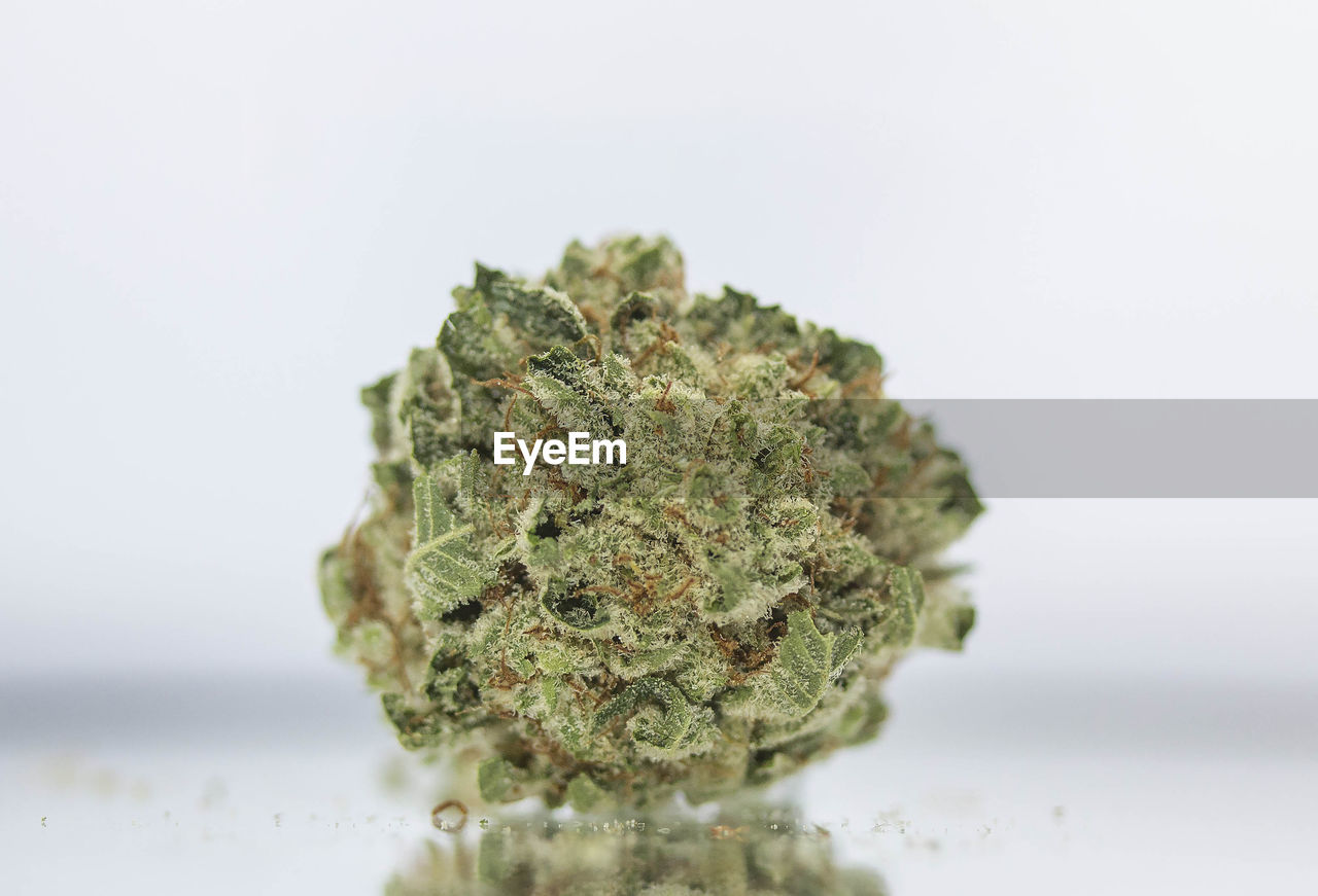 close-up, marijuana - herbal cannabis, studio shot, selective focus, white background, cannabis plant, indoors, healthcare and medicine, food and drink, green color, no people, still life, food, plant, herb, single object, medicine, herbal medicine, focus on foreground, alternative medicine, medical cannabis