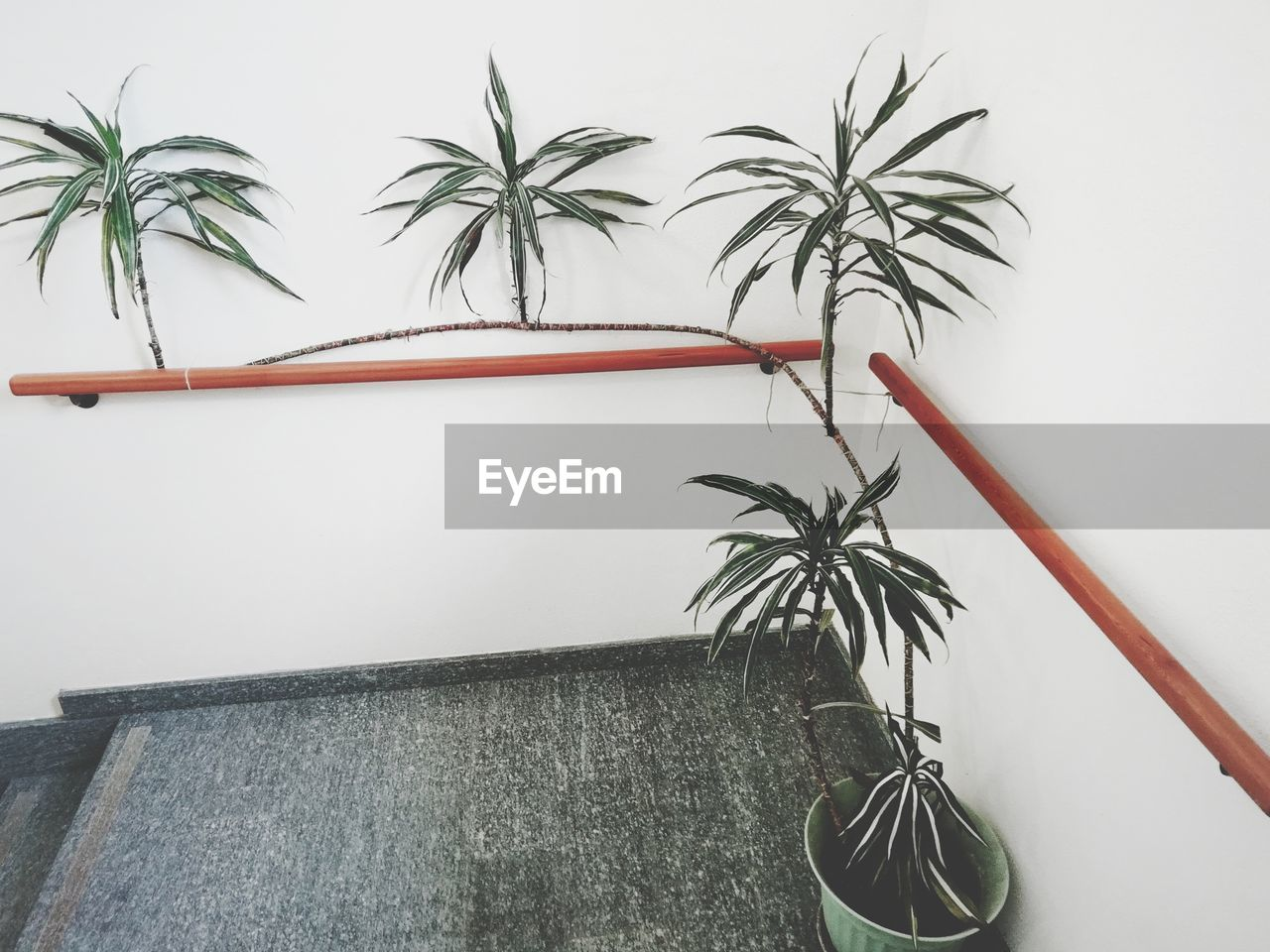 plant, no people, growth, potted plant, wall - building feature, indoors, nature, leaf, palm tree, plant part, tree, built structure, green color, houseplant, tropical climate, close-up, day, architecture, studio shot, palm leaf