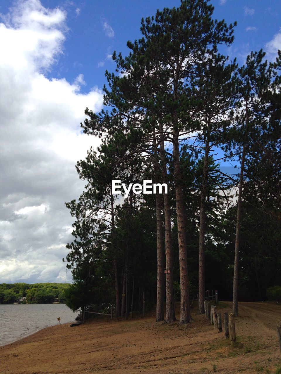 tree, sky, nature, cloud - sky, tranquility, growth, scenics, tranquil scene, beauty in nature, landscape, day, outdoors, no people