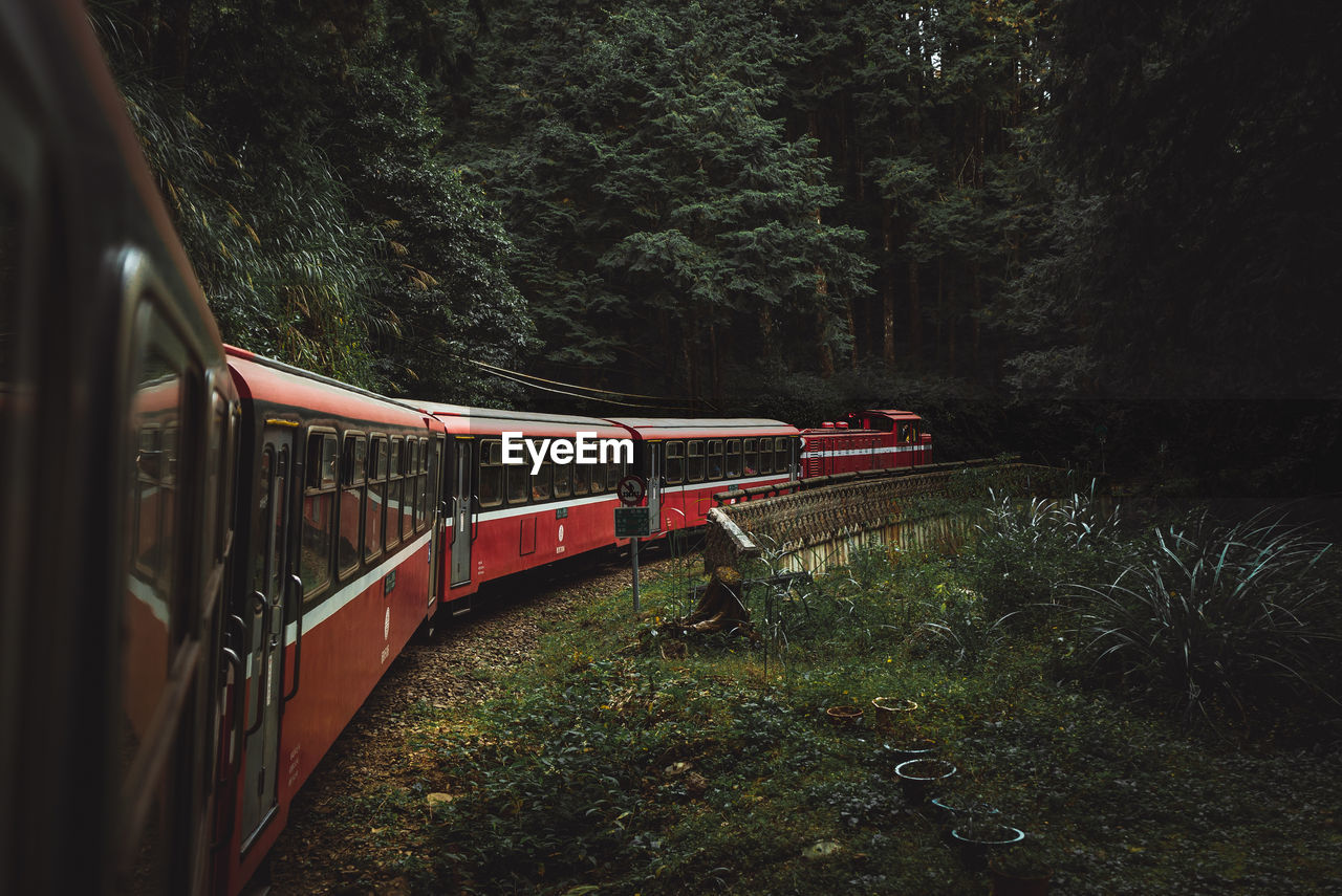 Train By Trees In Forest