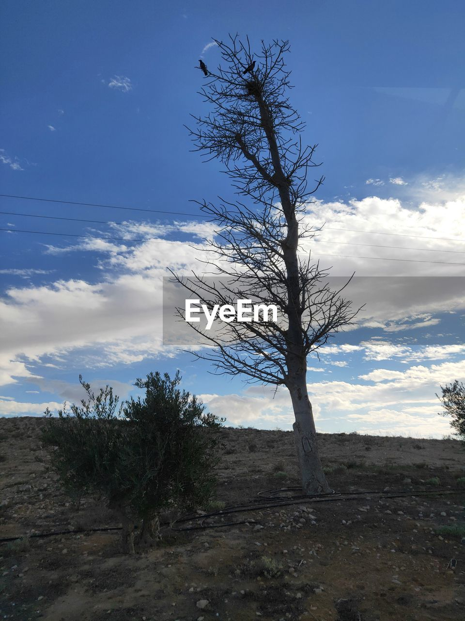 sky, cloud - sky, tree, plant, tranquility, tranquil scene, land, bare tree, beauty in nature, non-urban scene, field, no people, landscape, scenics - nature, environment, nature, day, outdoors, branch, growth, isolated, arid climate