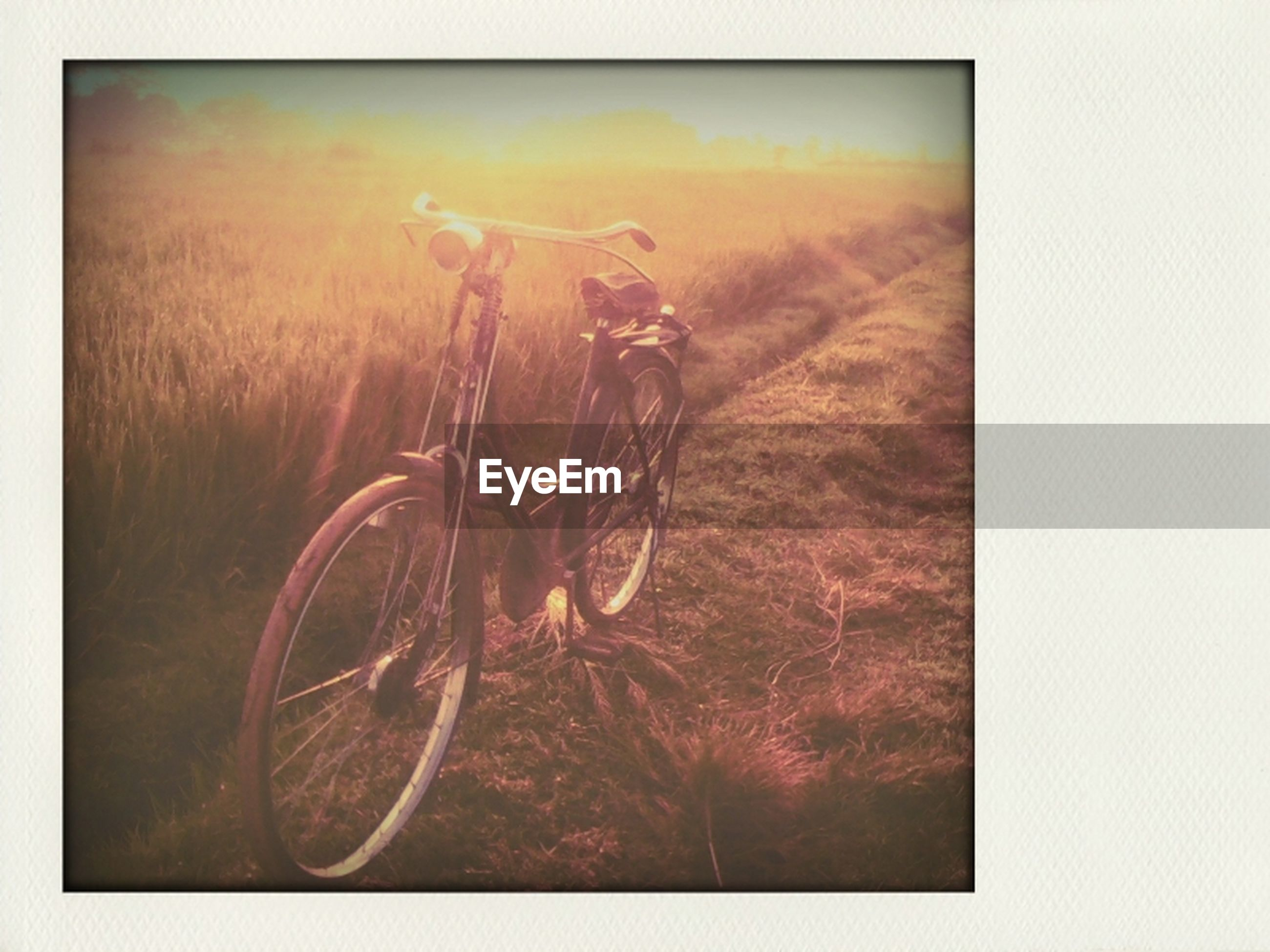 transfer print, auto post production filter, bicycle, sunset, copy space, nature, sunlight, no people, field, orange color, outdoors, beauty in nature, tranquility, vignette, grass, day, side view, lens flare, close-up, sun