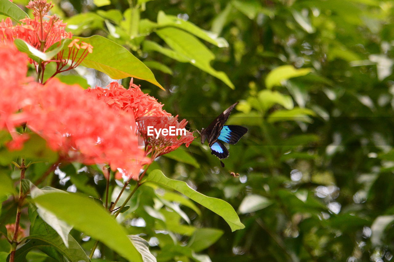 plant, growth, insect, beauty in nature, one animal, plant part, animals in the wild, flowering plant, leaf, animal wildlife, invertebrate, flower, close-up, freshness, animal, animal themes, fragility, vulnerability, petal, no people, flower head, pollination, animal wing, butterfly - insect