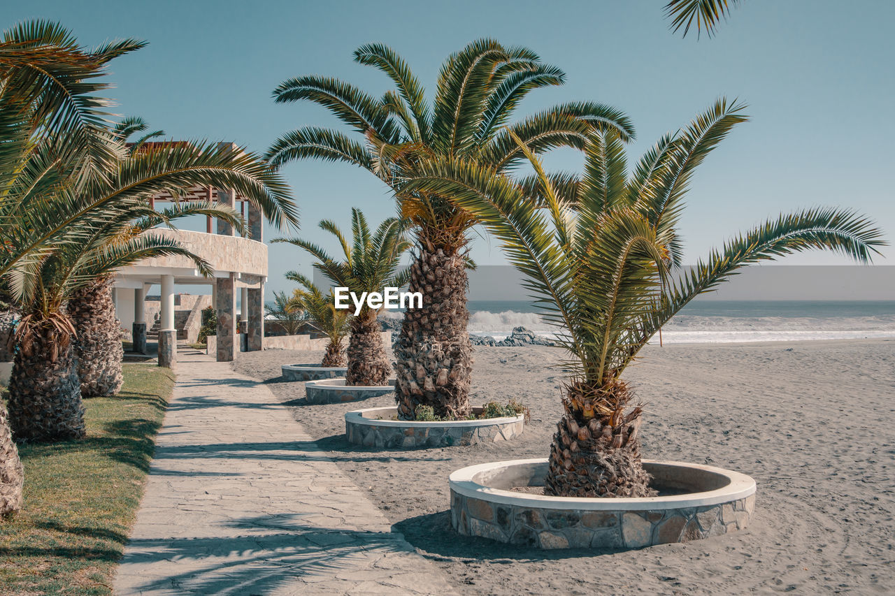 plant, palm tree, tropical climate, tree, sky, nature, growth, day, land, water, no people, sunlight, beauty in nature, scenics - nature, sea, date palm tree, outdoors, sand, shadow, tranquil scene, horizon over water, tropical tree