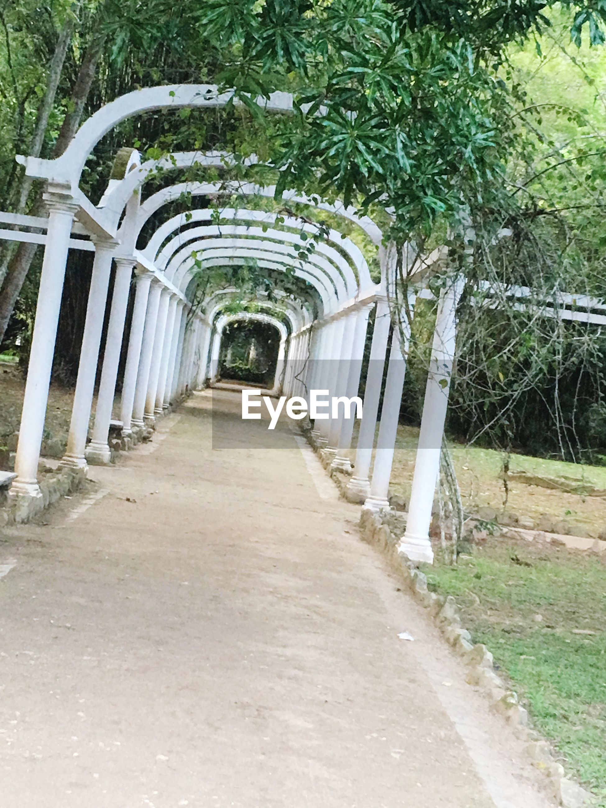 the way forward, arch, diminishing perspective, plant, in a row, narrow, ivy, built structure, long, empty, architecture, archway, vanishing point, corridor, pergola, outdoors, day, creeper plant, footpath, lush foliage, formal garden, growth, repetition, no people, arcade, stone, arched, tranquility