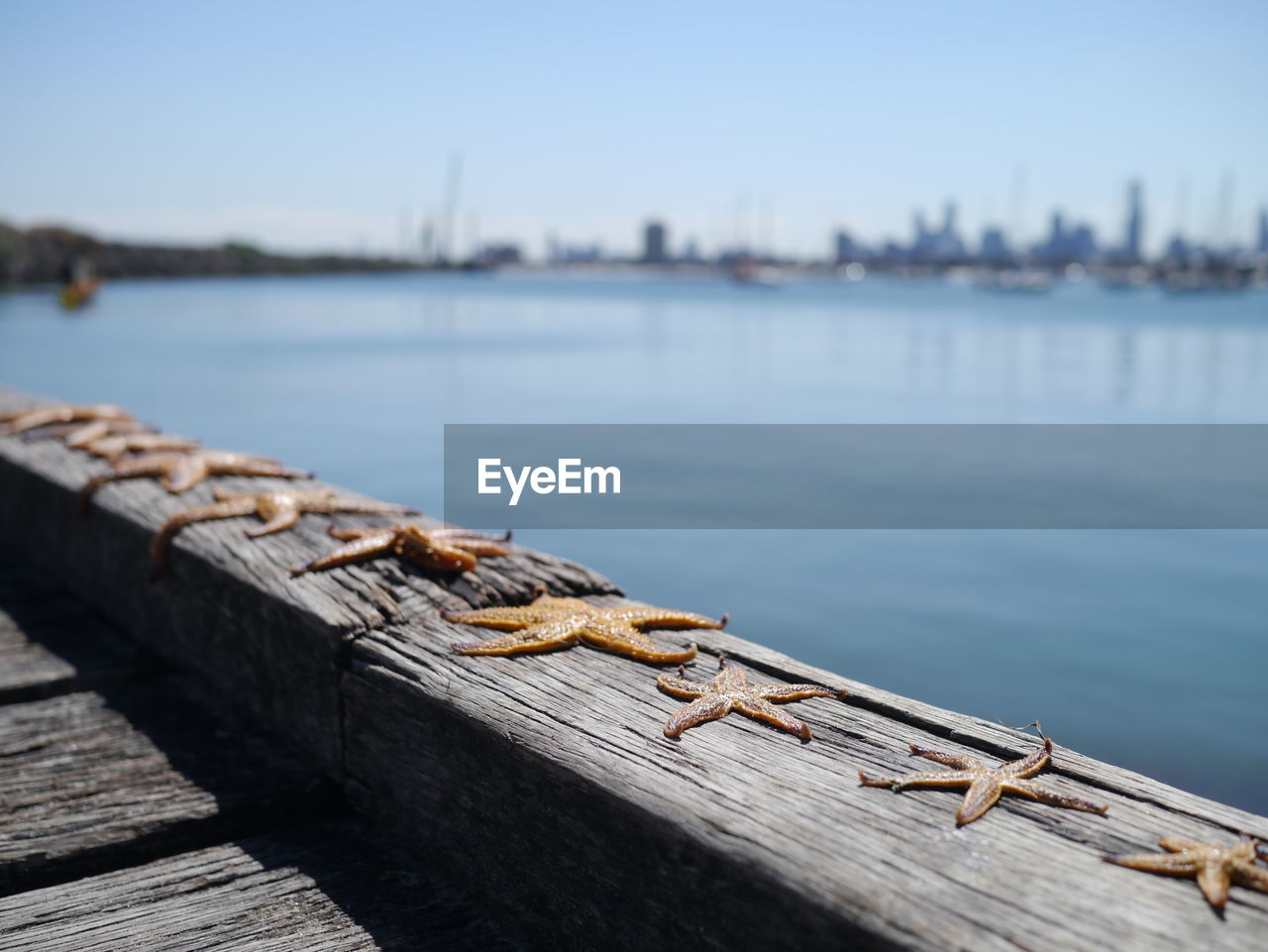 Dead starfish on pier by sea against sky