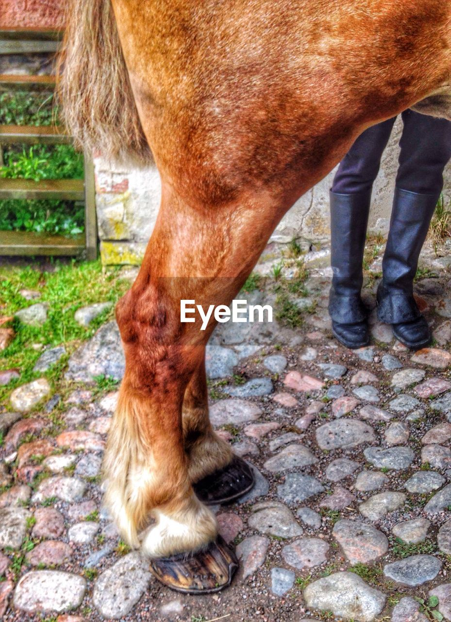 one animal, domestic animals, animal themes, mammal, animal leg, horse, brown, livestock, no people, low section, pets, day, outdoors, close-up, nature