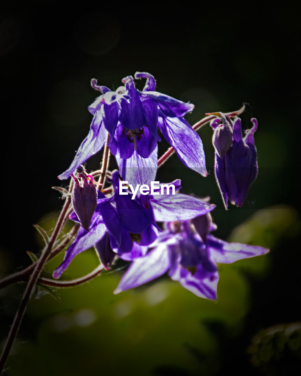 flower, fragility, beauty in nature, purple, growth, nature, petal, no people, plant, freshness, close-up, flower head, outdoors, blooming, day