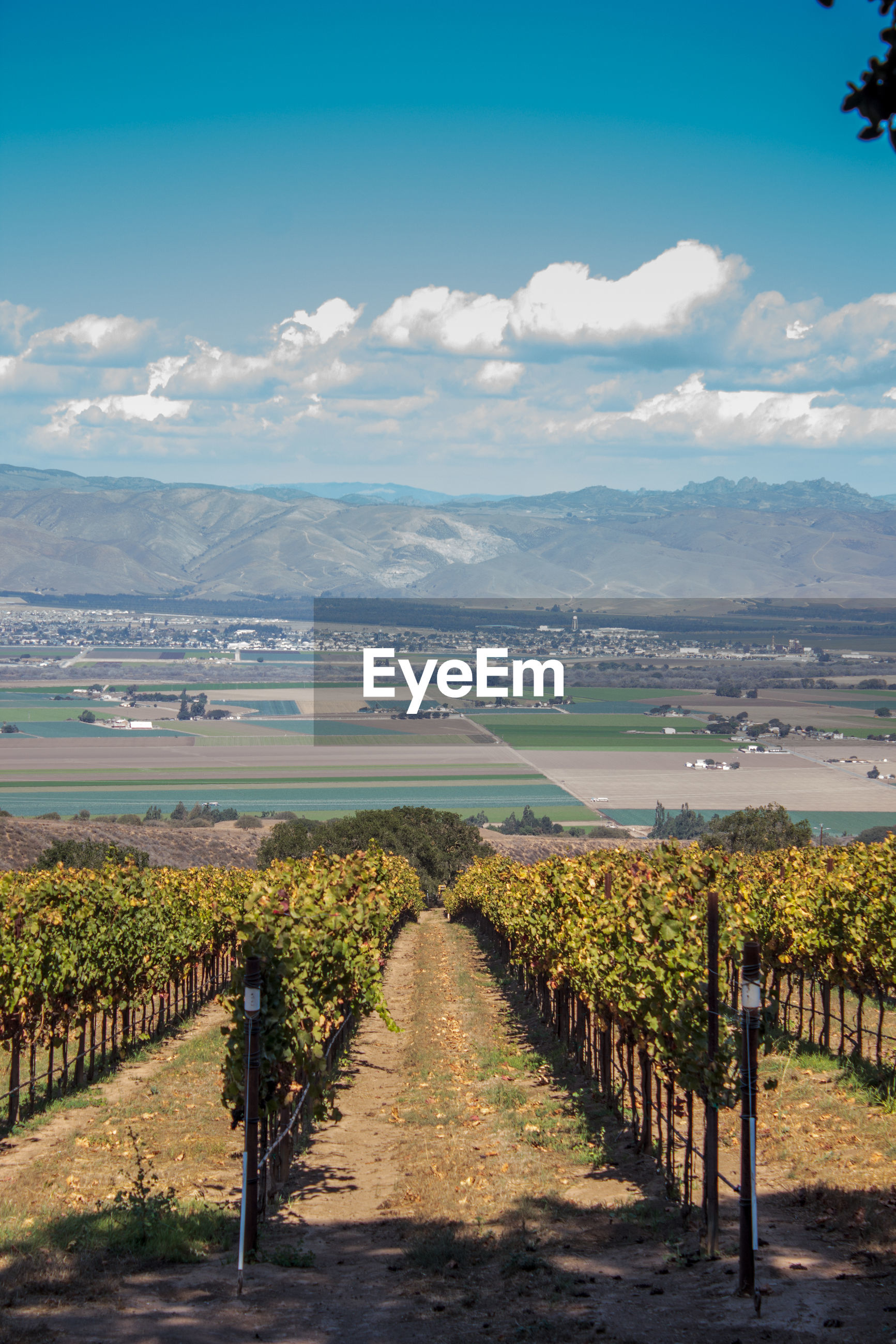 SCENIC VIEW OF VINEYARD AND LANDSCAPE AGAINST SKY