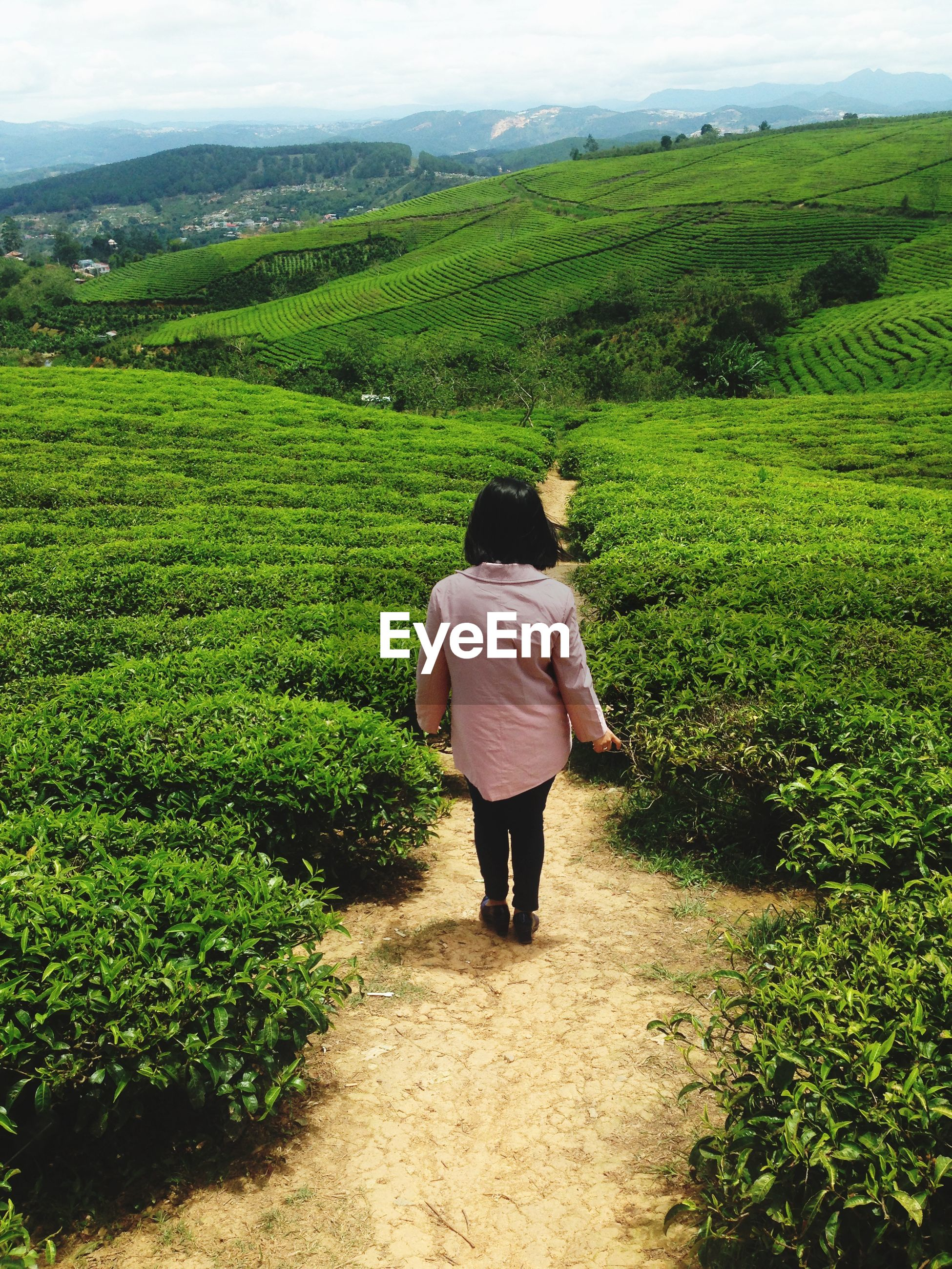 Rear view of woman walking amid tea landscape