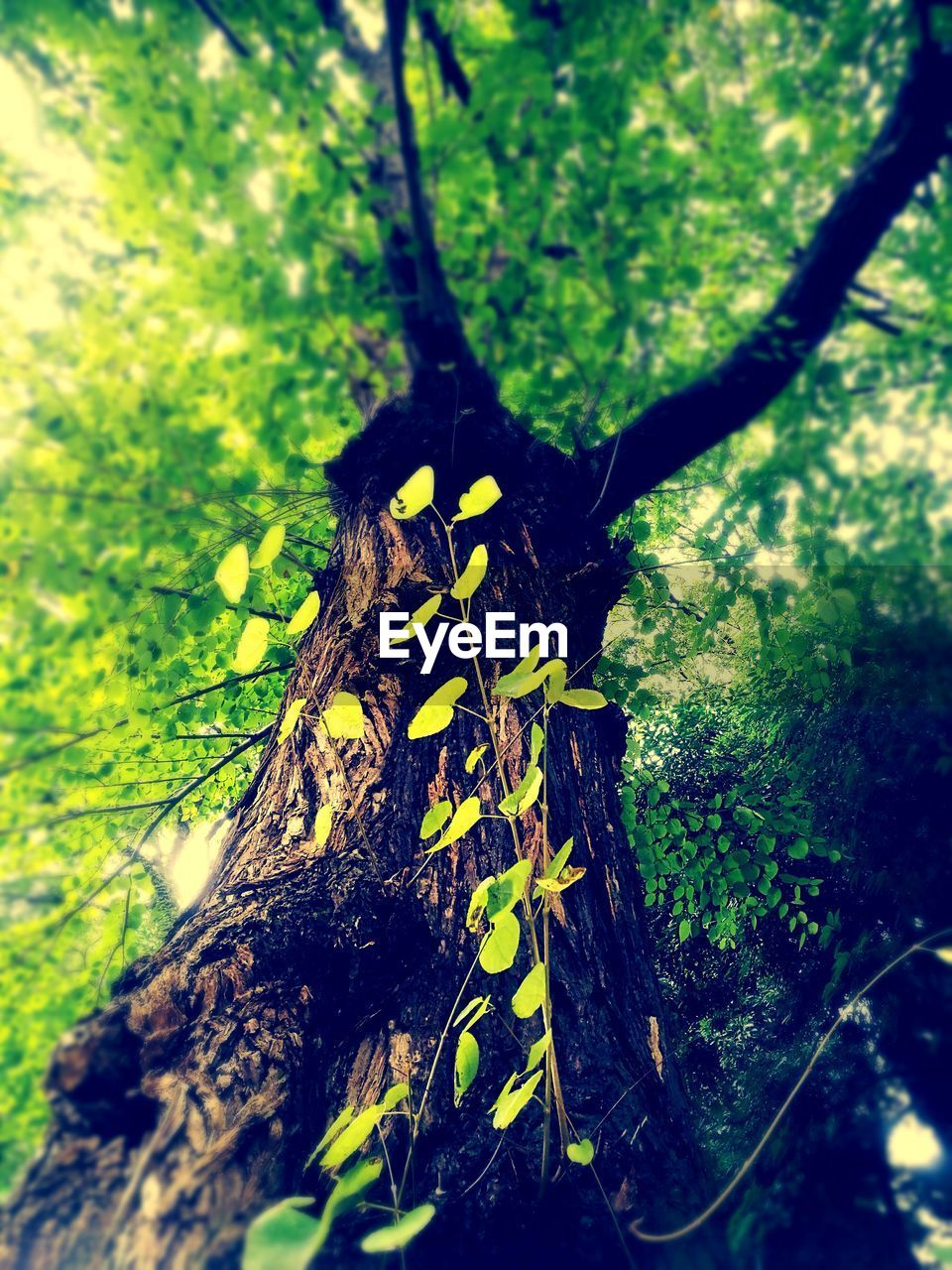 growth, nature, tree, no people, tree trunk, outdoors, green color, close-up, day, plant, beauty in nature, forest, grass, animal themes