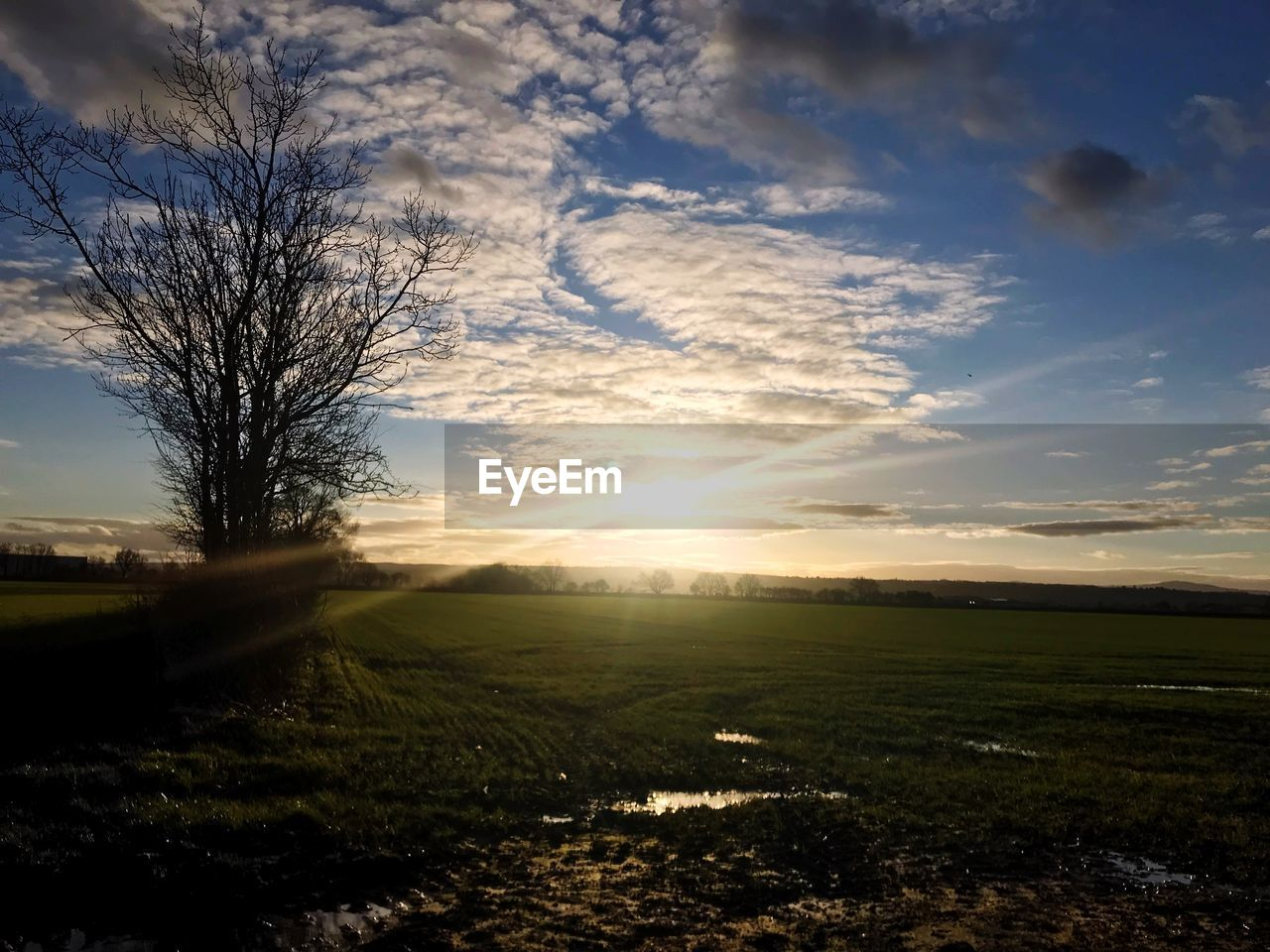 sky, scenics - nature, cloud - sky, tranquility, tranquil scene, beauty in nature, environment, landscape, field, sunset, land, sunlight, plant, sun, nature, tree, no people, rural scene, non-urban scene, grass, outdoors, lens flare