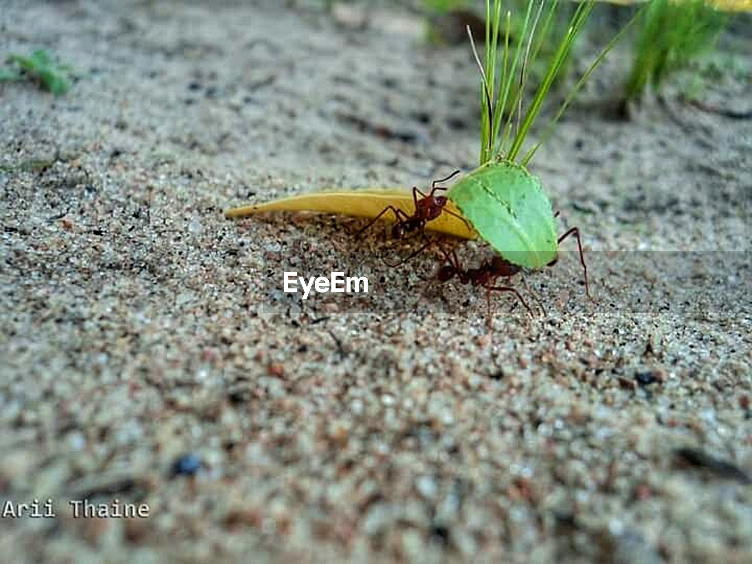 one animal, animal themes, animals in the wild, insect, wildlife, selective focus, close-up, focus on foreground, full length, nature, animal antenna, green color, zoology, leaf, outdoors, day, high angle view, no people, side view, yellow