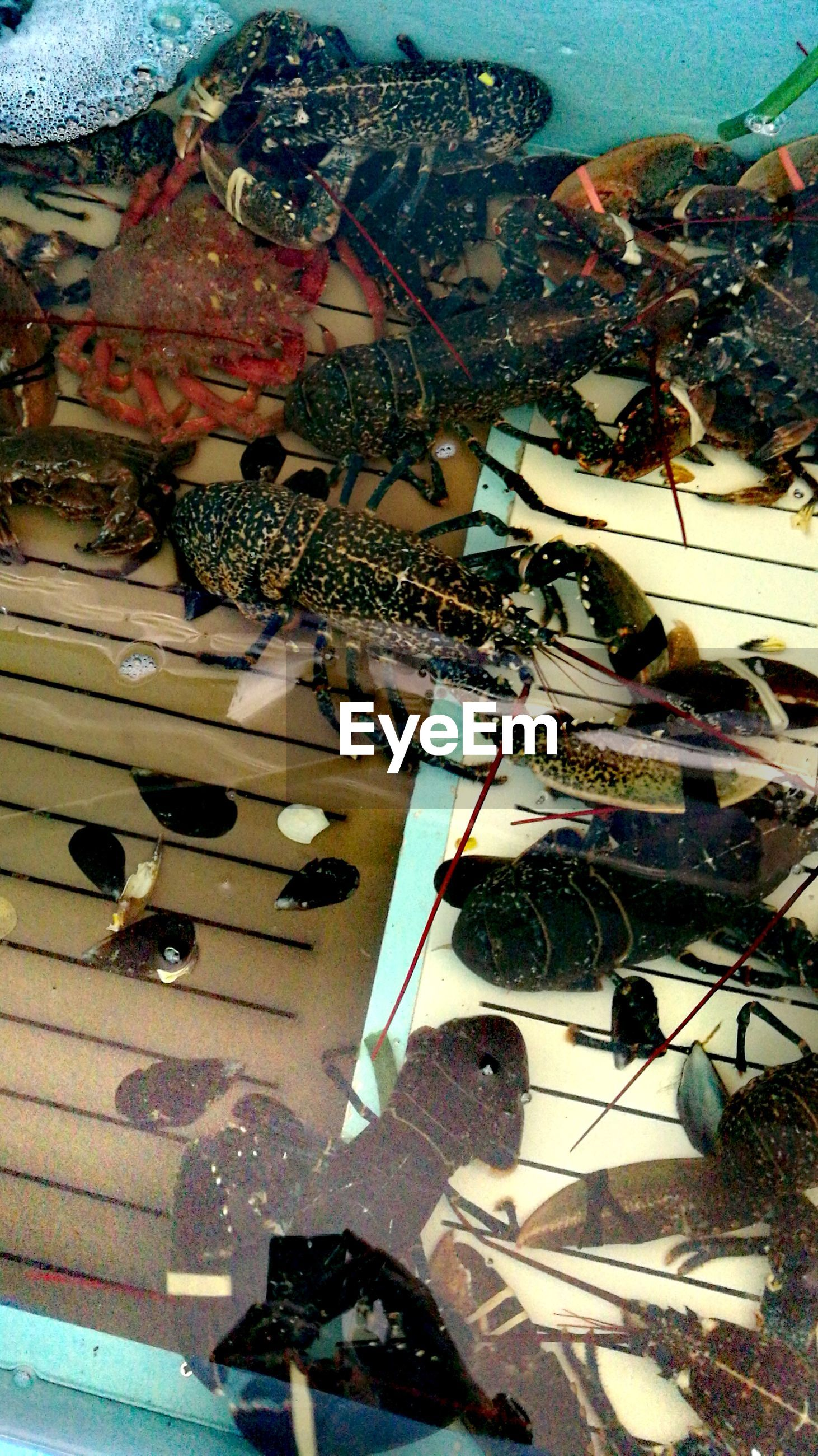 High angle view of crabs and lobsters in water