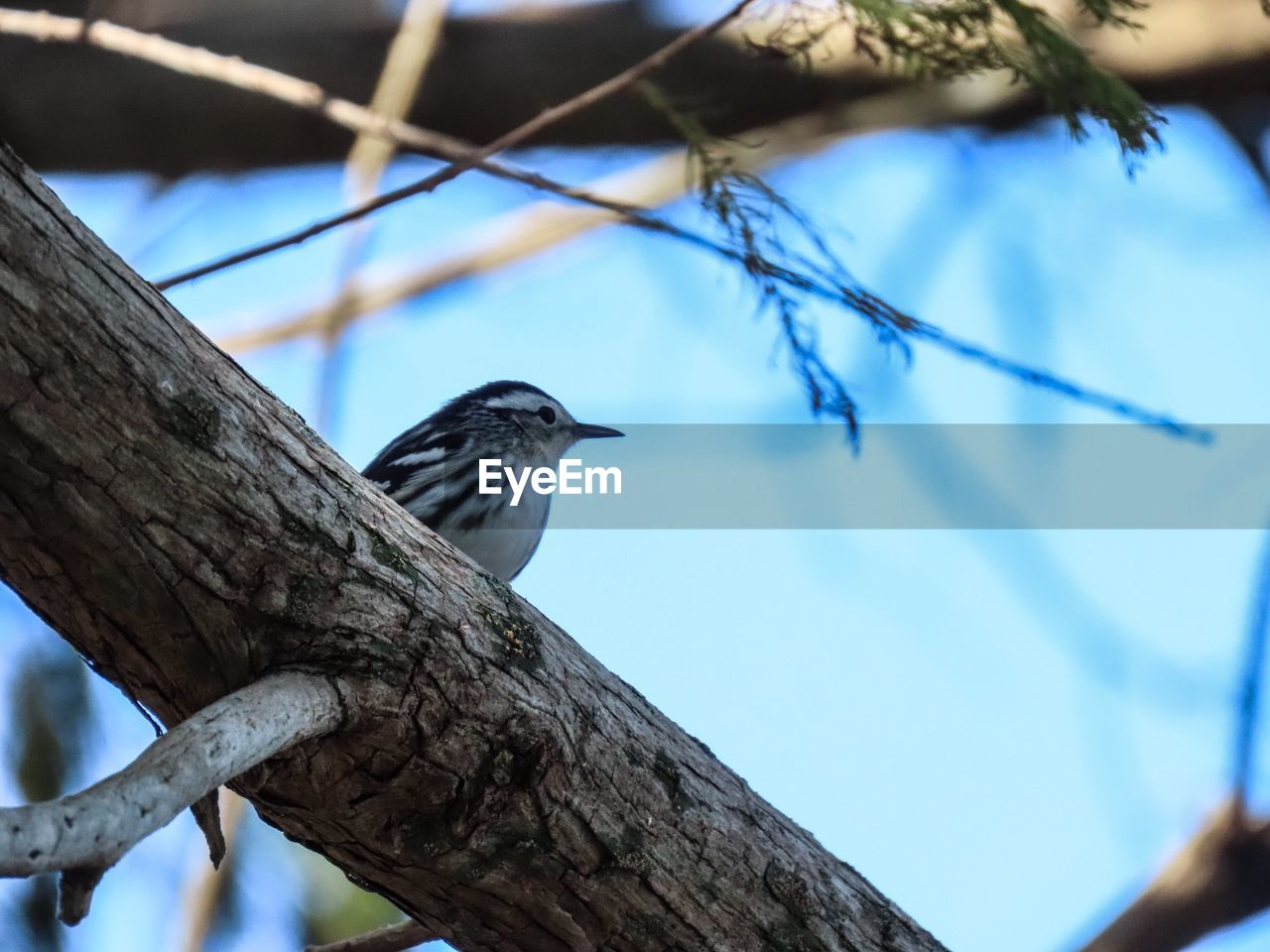 vertebrate, bird, animal, animal wildlife, animal themes, animals in the wild, tree, branch, perching, focus on foreground, one animal, low angle view, no people, plant, day, nature, blue, wood - material, outdoors, sky