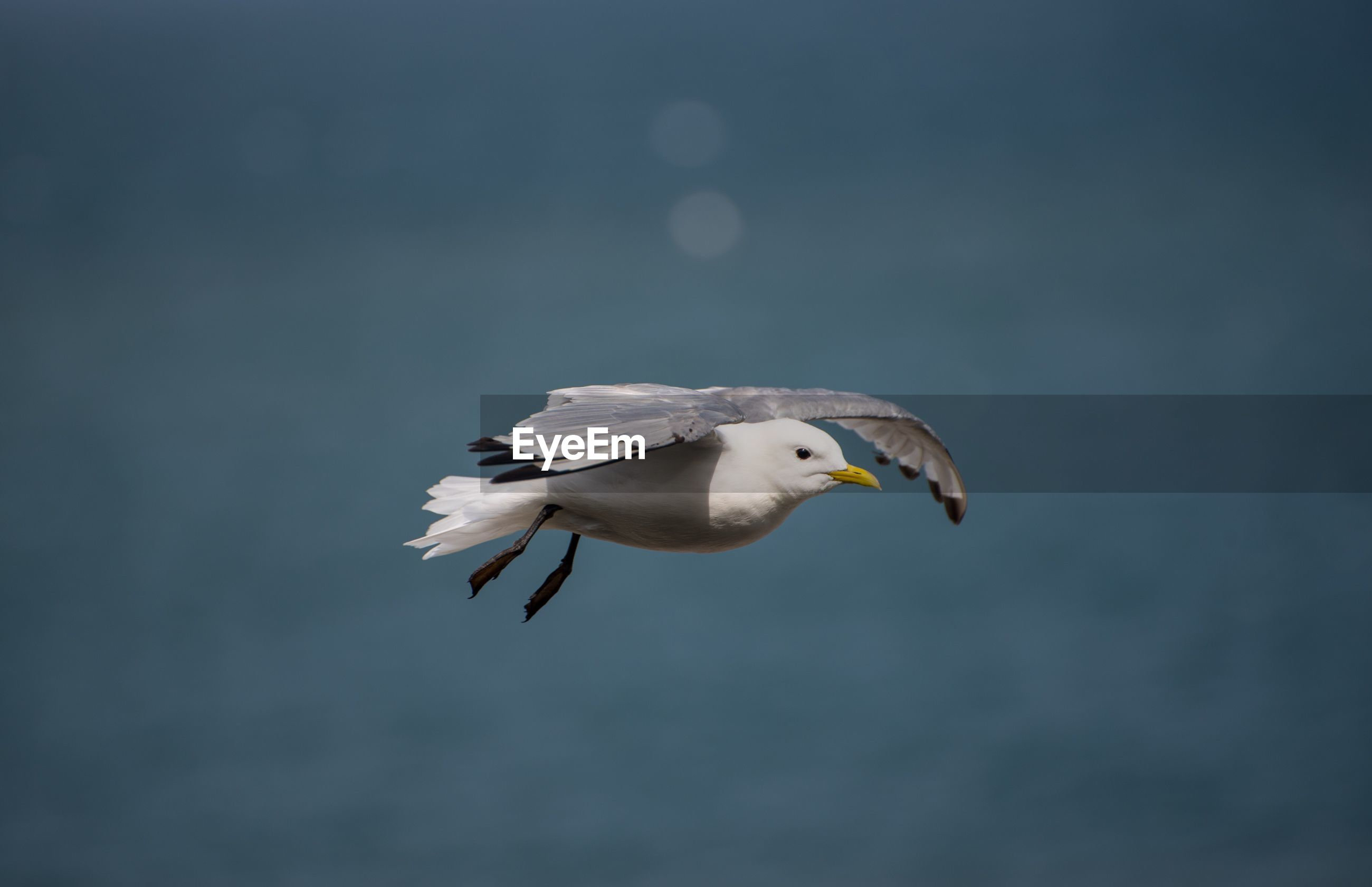 Close-up of seagull flying against sky