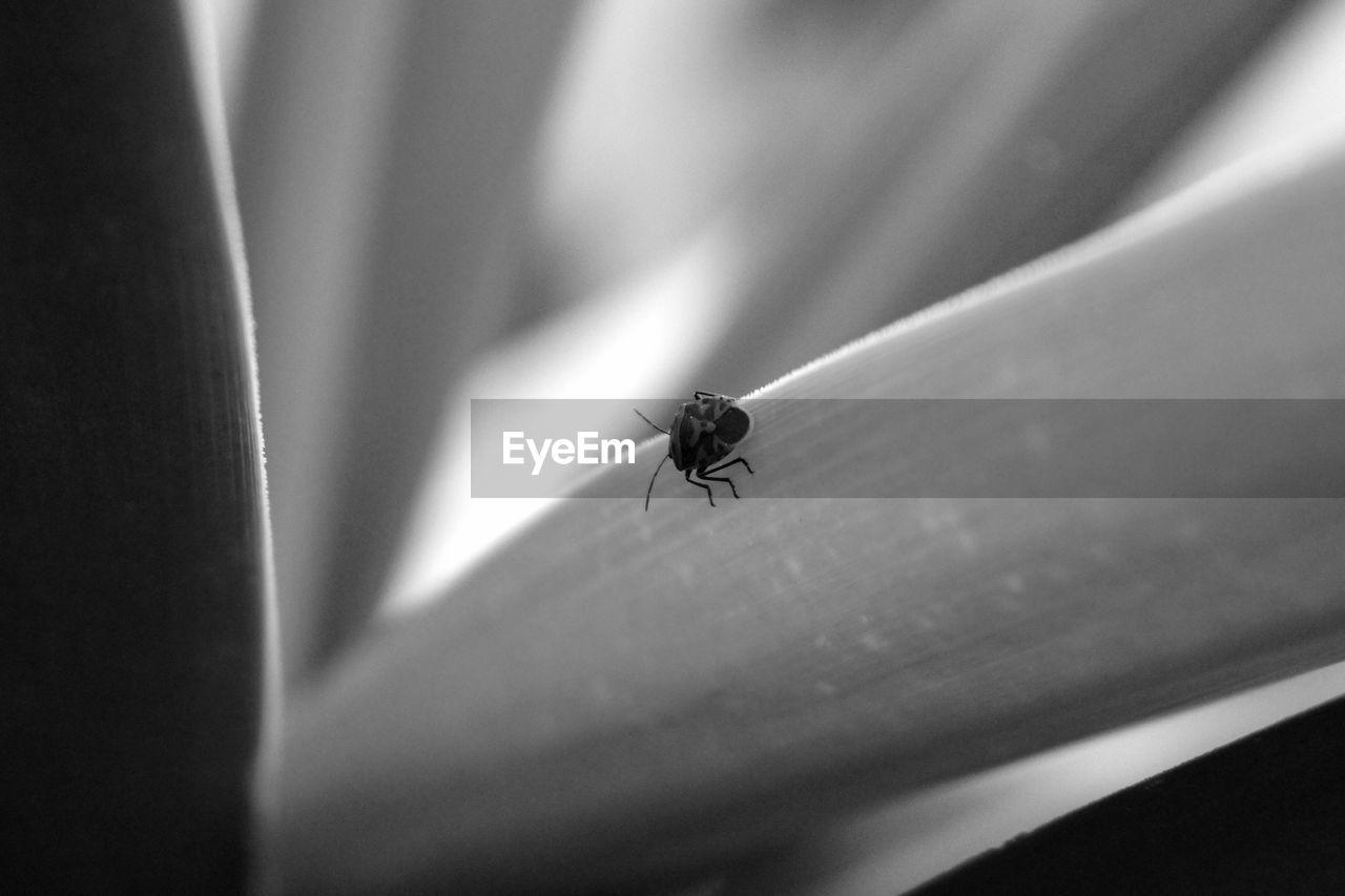 Close-Up Of Firebug On Grass