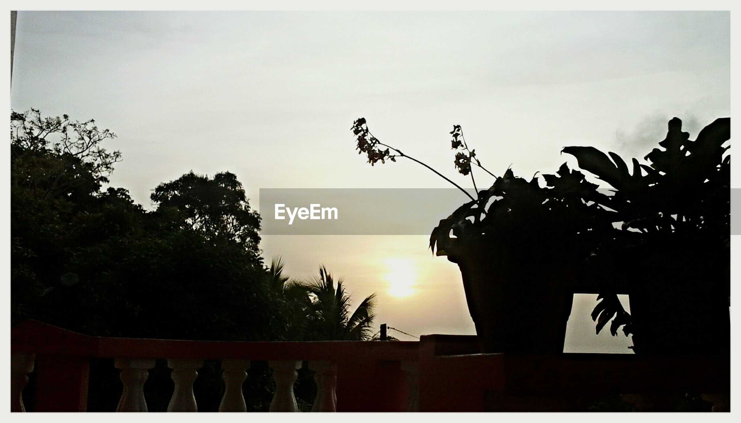 transfer print, sky, tree, silhouette, auto post production filter, low angle view, growth, sunset, nature, dusk, built structure, tranquility, outdoors, cloud - sky, clear sky, palm tree, plant, no people, beauty in nature, fence