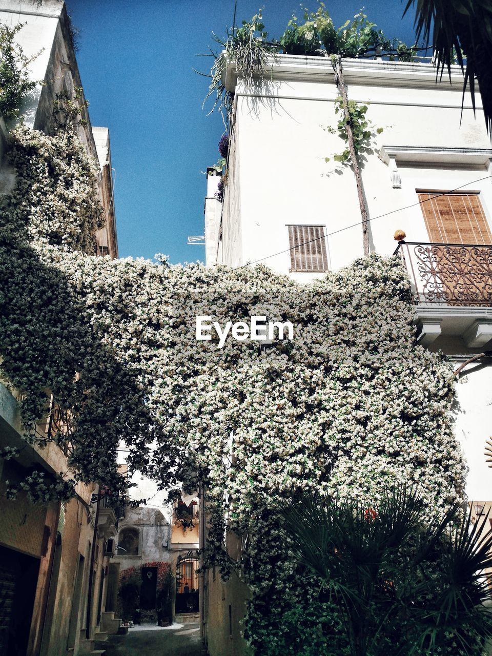 built structure, architecture, building exterior, plant, building, residential district, growth, nature, house, flowering plant, flower, day, tree, no people, low angle view, outdoors, sky, window, freshness, sunlight