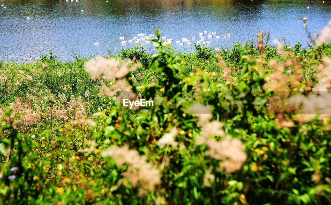 Flowers Growing On Plant By River