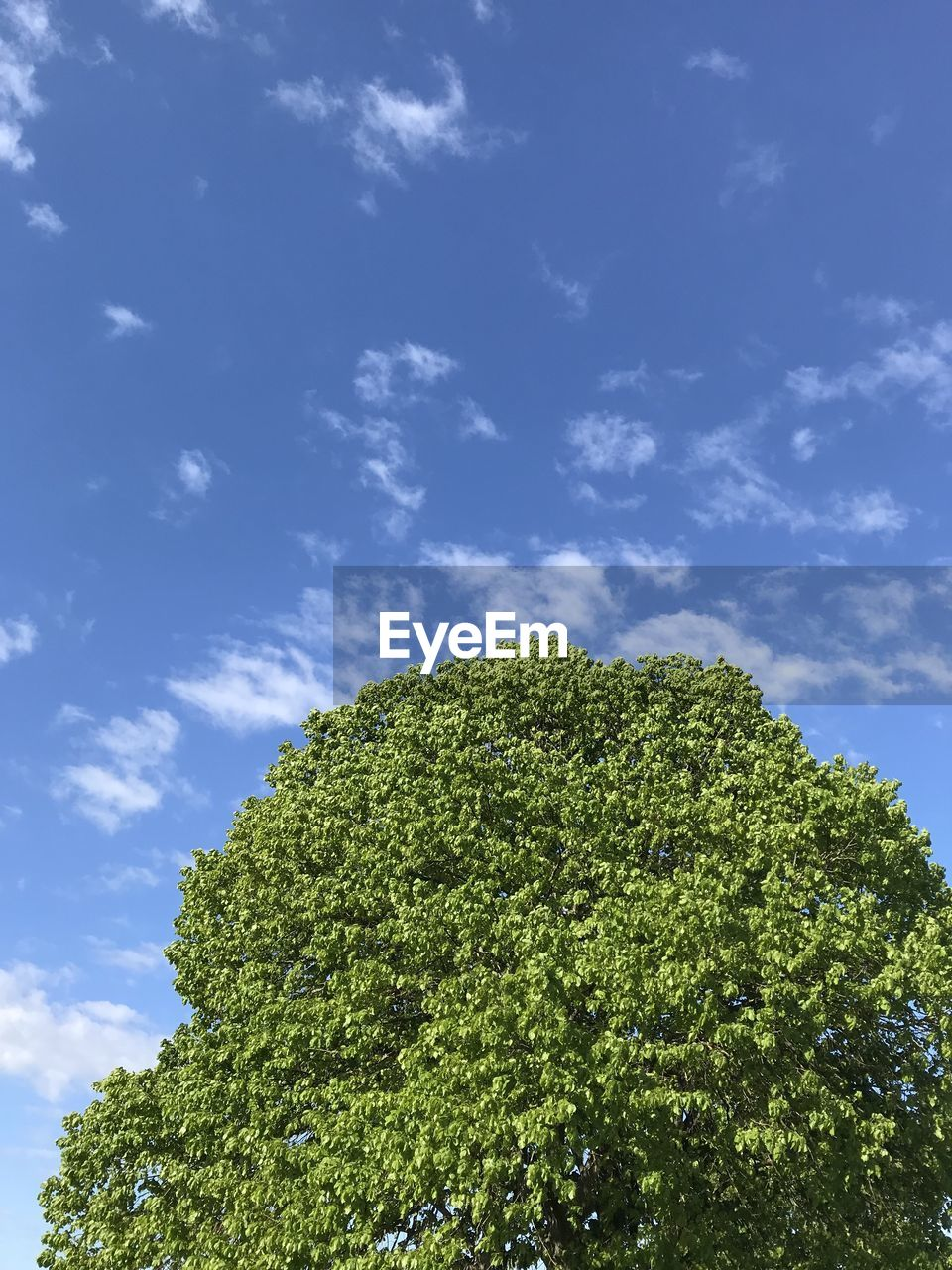 cloud - sky, tree, sky, green color, plant, growth, low angle view, beauty in nature, day, no people, nature, tranquility, blue, outdoors, sunlight, tranquil scene, treetop, scenics - nature, branch, green