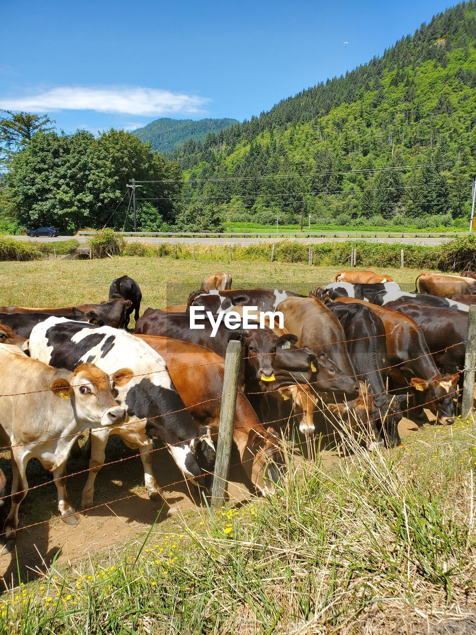 VIEW OF COWS ON FIELD