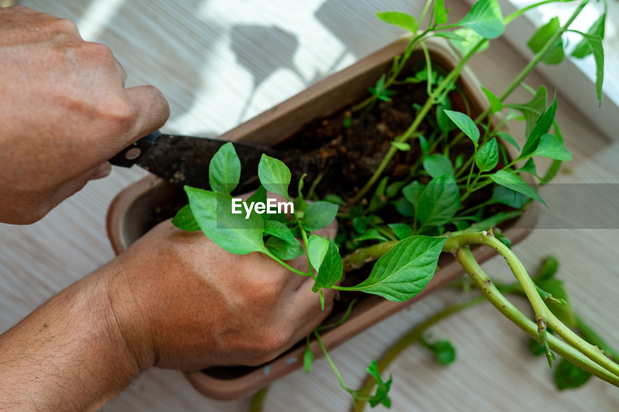 CROPPED IMAGE OF PERSON HOLDING POTTED PLANT