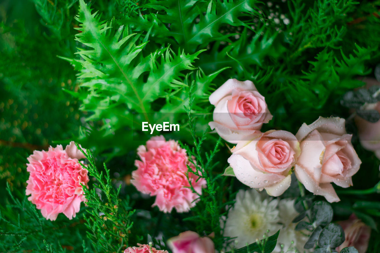 flowering plant, flower, beauty in nature, plant, freshness, pink color, vulnerability, fragility, petal, close-up, flower head, growth, inflorescence, rose, plant part, rose - flower, nature, no people, leaf, green color, outdoors, bouquet, flower arrangement
