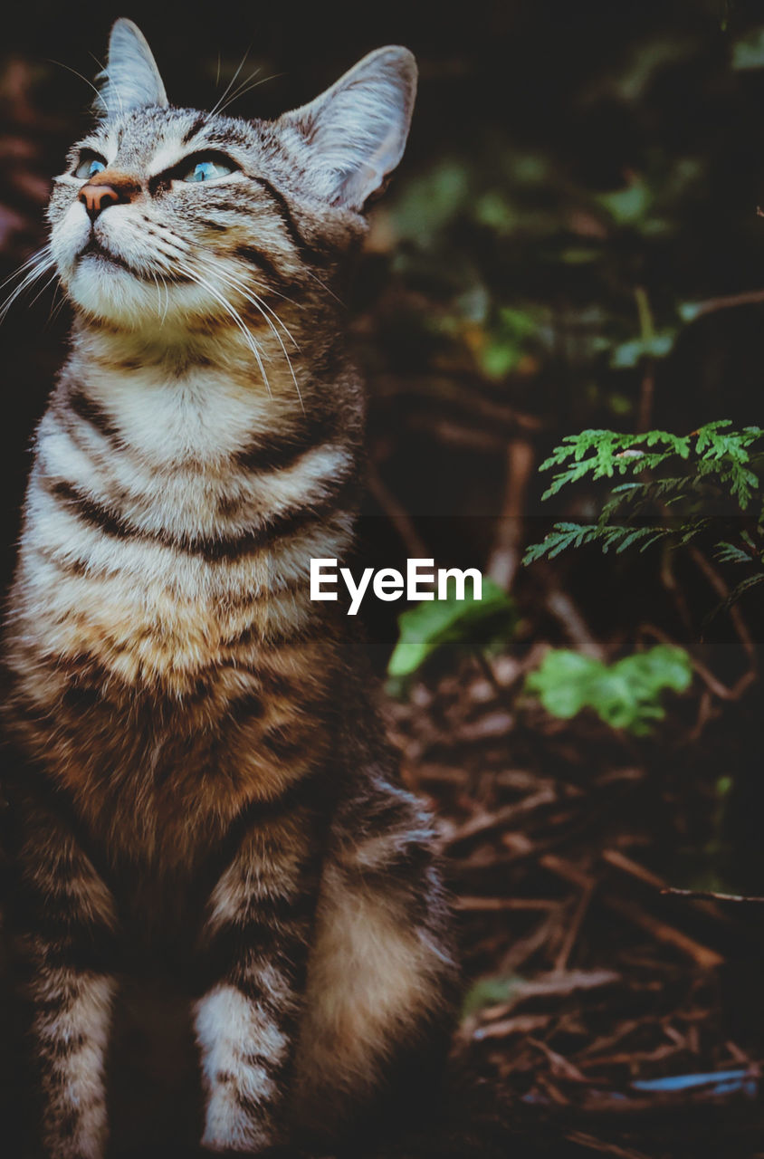 cat, animal, feline, animal themes, mammal, one animal, domestic cat, domestic animals, pets, domestic, vertebrate, no people, field, close-up, looking, land, nature, whisker, focus on foreground, looking away, tabby, animal eye