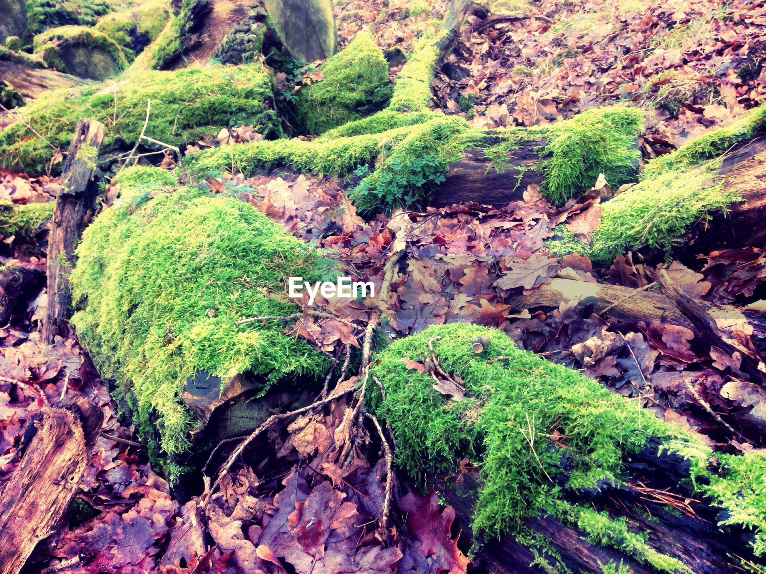 Moss on old fallen tree