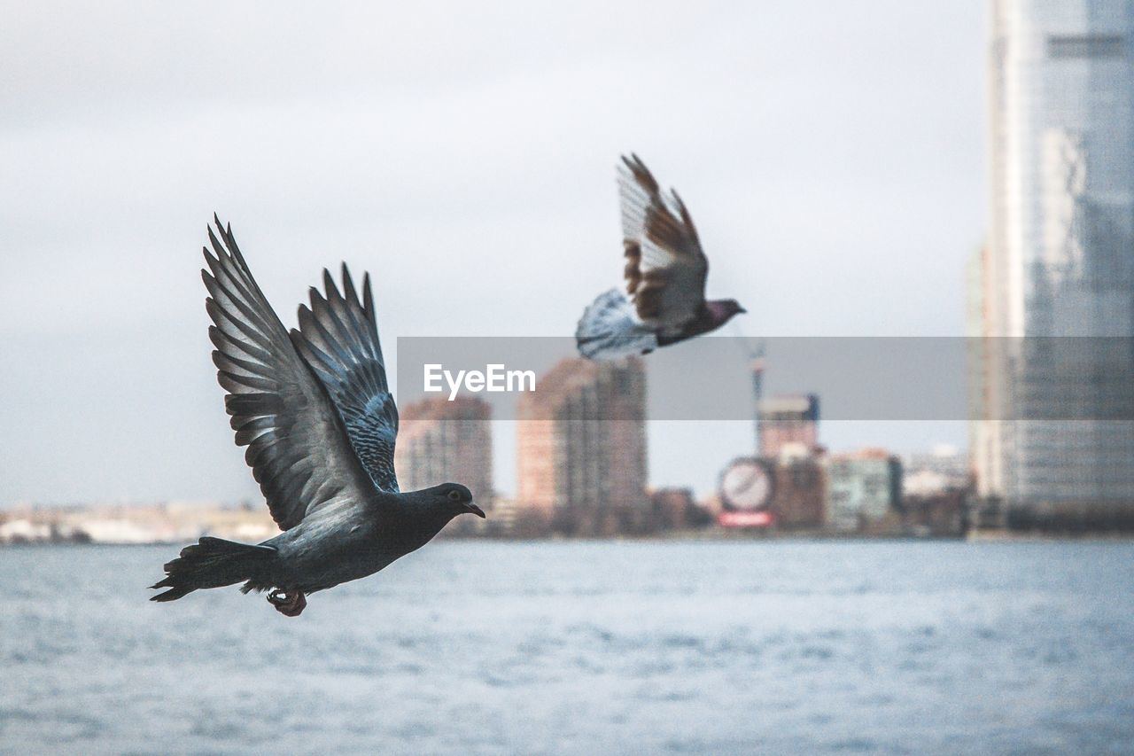 Pigeons Flying Over River Against Sky