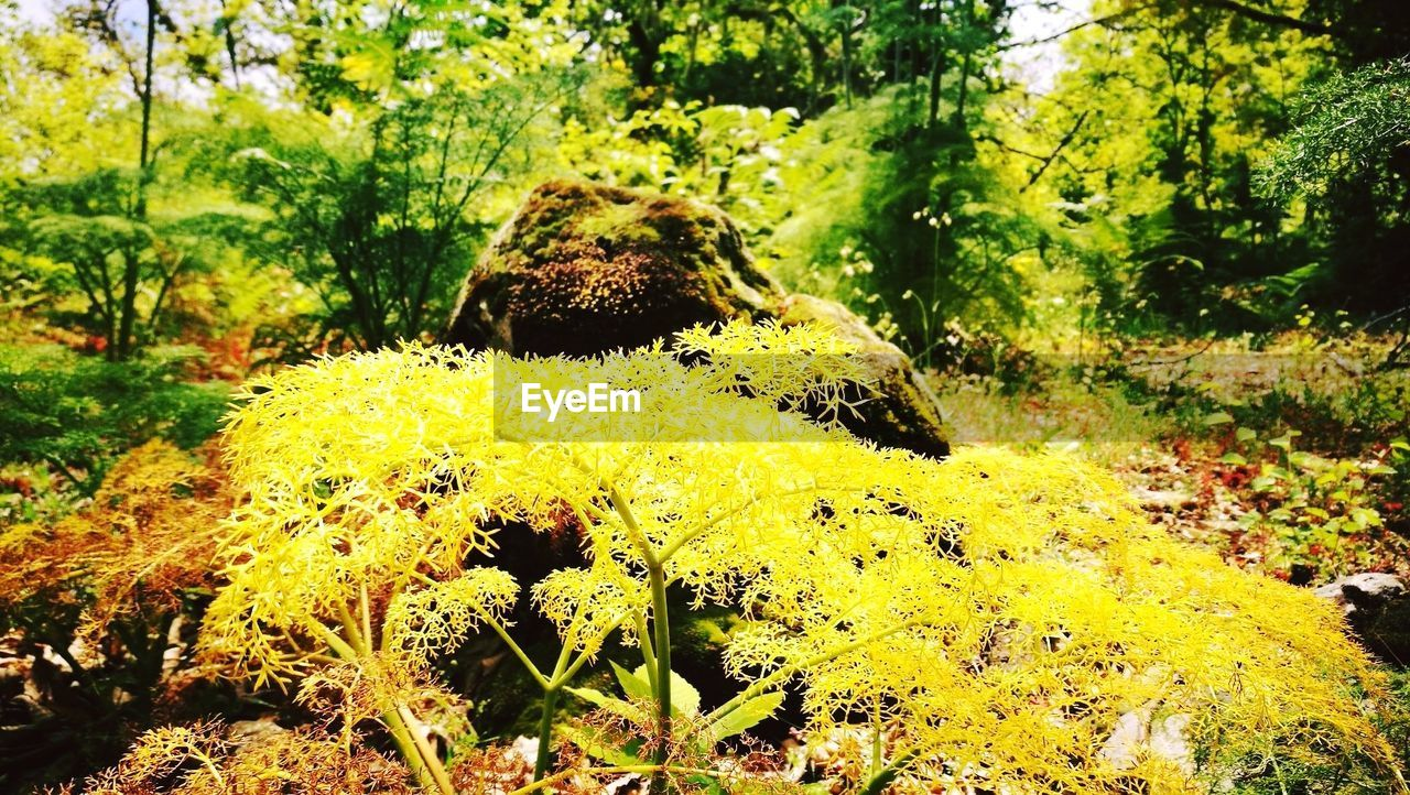 nature, day, no people, outdoors, close-up, tranquility, yellow, forest, beauty in nature, growth, tree, fragility