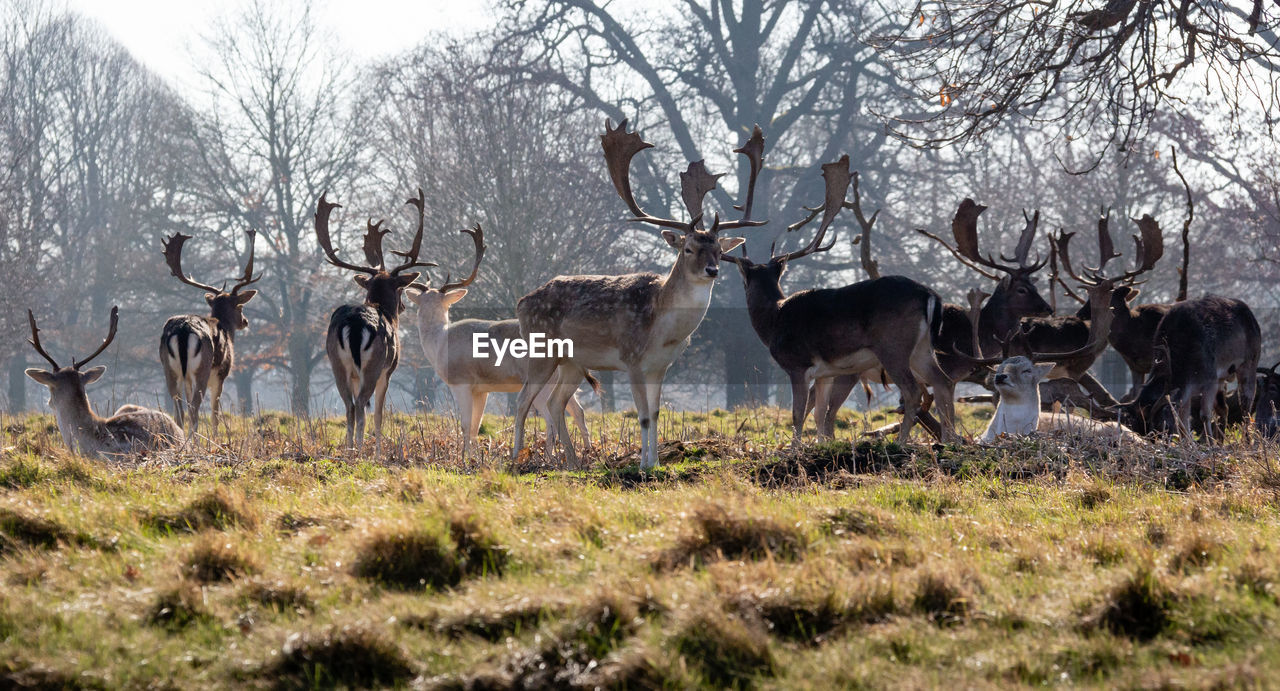 animal, animal themes, animal wildlife, deer, animals in the wild, mammal, group of animals, plant, tree, grass, land, vertebrate, no people, field, day, nature, large group of animals, antler, herd, reindeer, herbivorous, outdoors