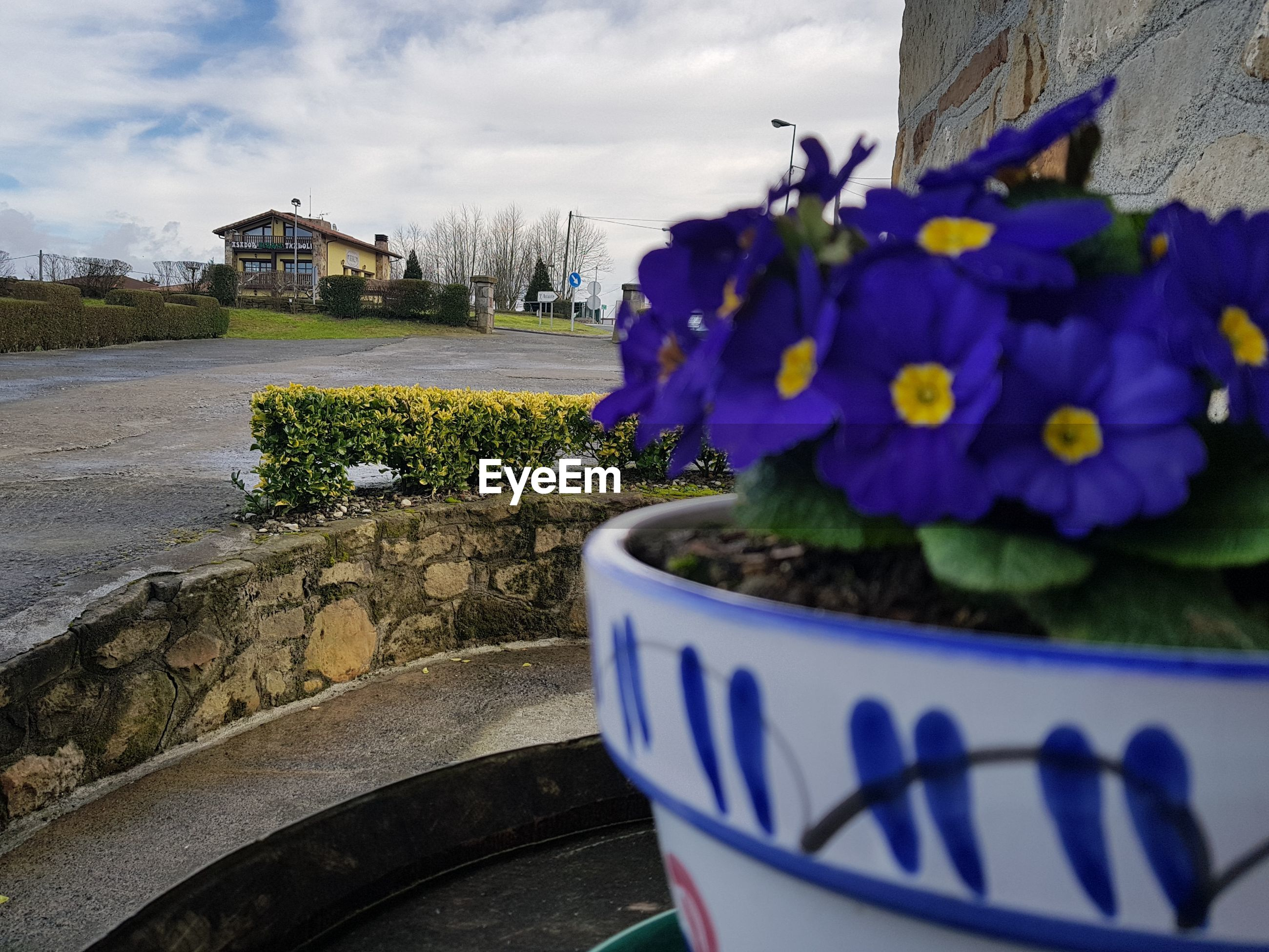 CLOSE-UP OF BLUE FLOWER POT BY BUILDING