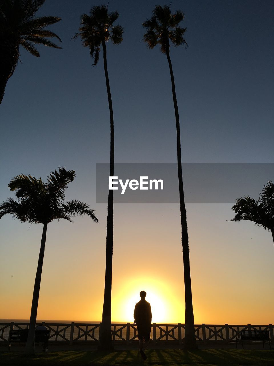 Silhouette man standing against palm trees at beach