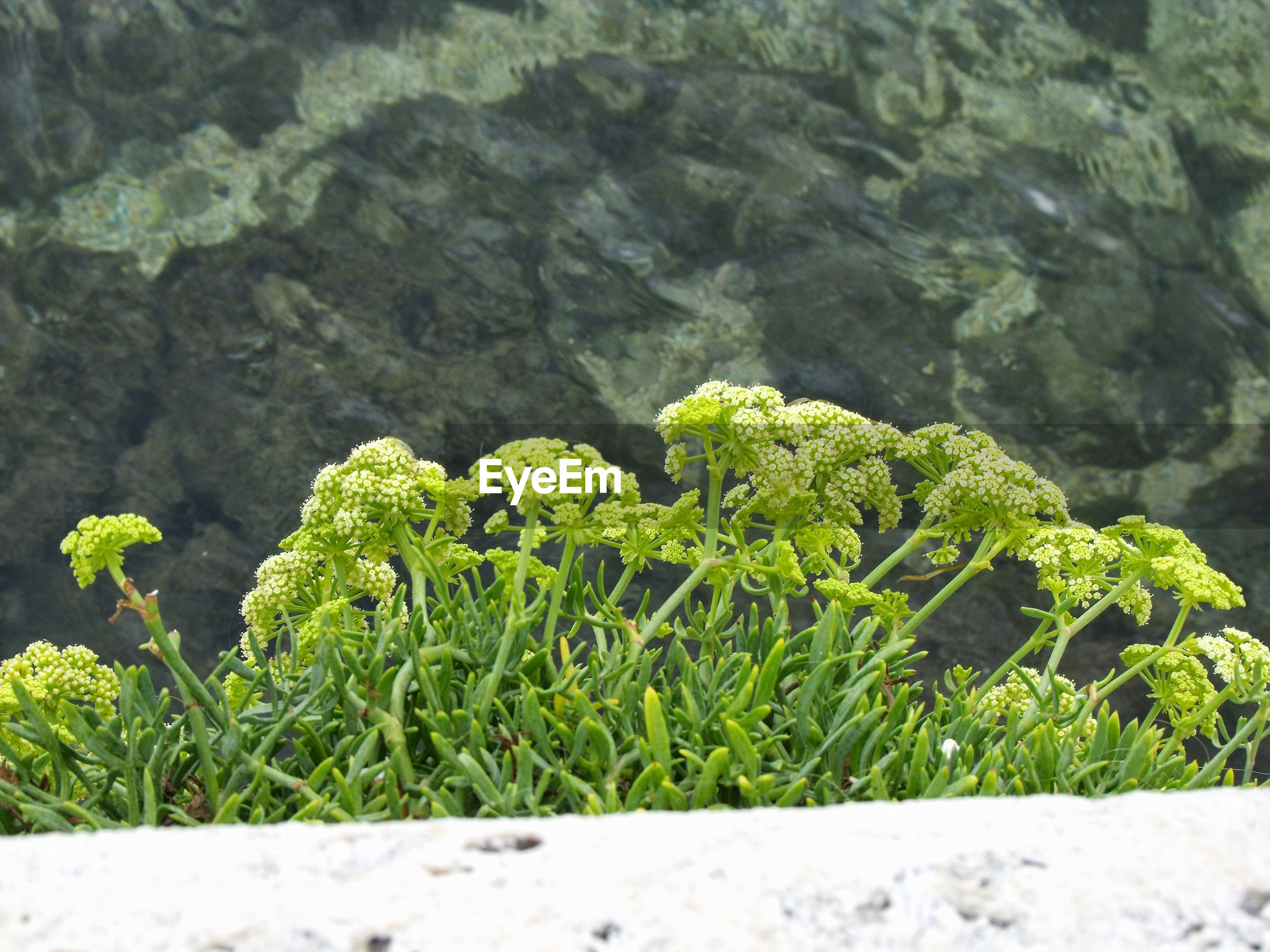 Close-up of plants growing against rock