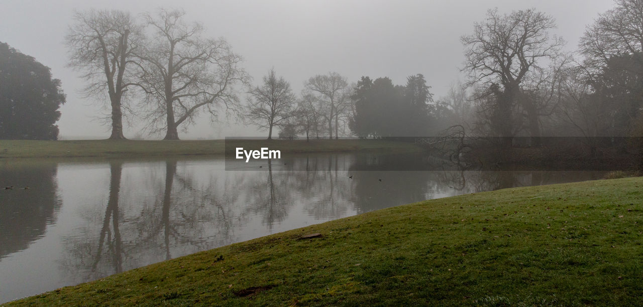 tree, water, plant, beauty in nature, tranquility, fog, tranquil scene, scenics - nature, no people, nature, lake, sky, land, grass, day, non-urban scene, outdoors, environment, hazy