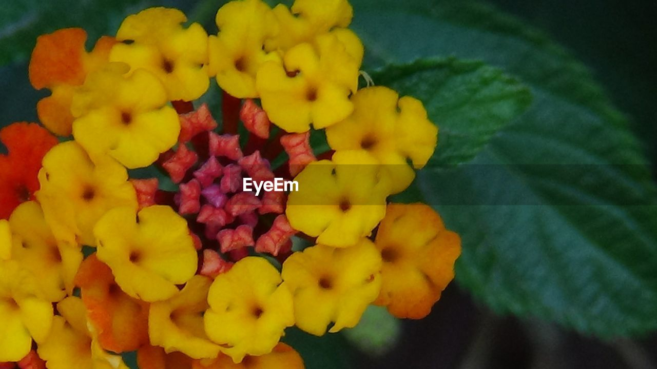 yellow, freshness, flower, fragility, beauty in nature, petal, nature, growth, fruit, plant, flower head, no people, outdoors, day, close-up